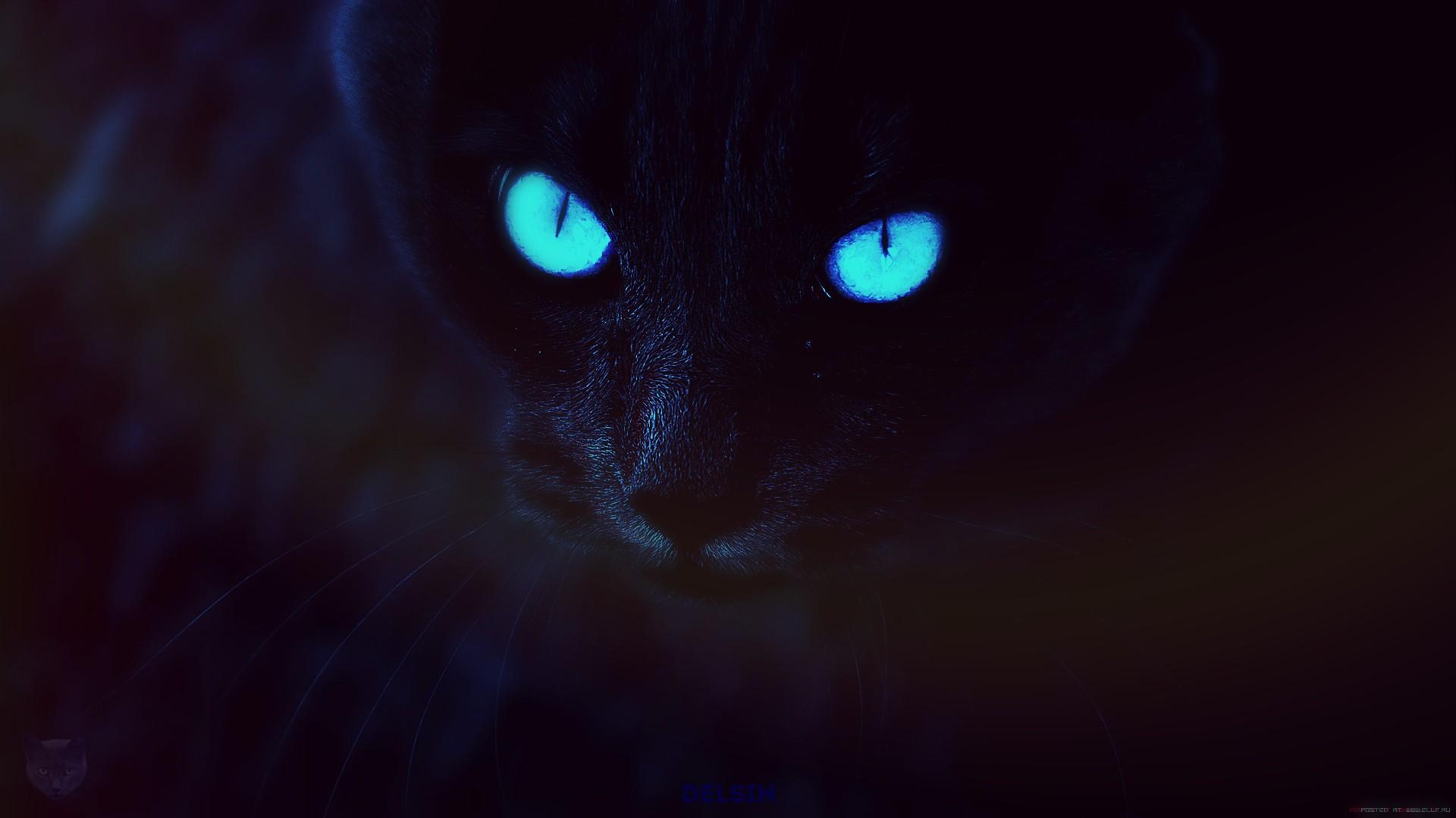 Black Cat laptop background