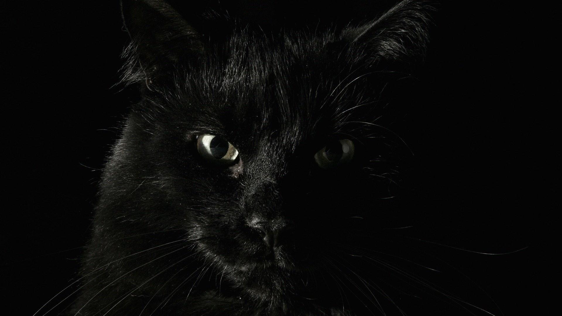 Black Cat picture hd