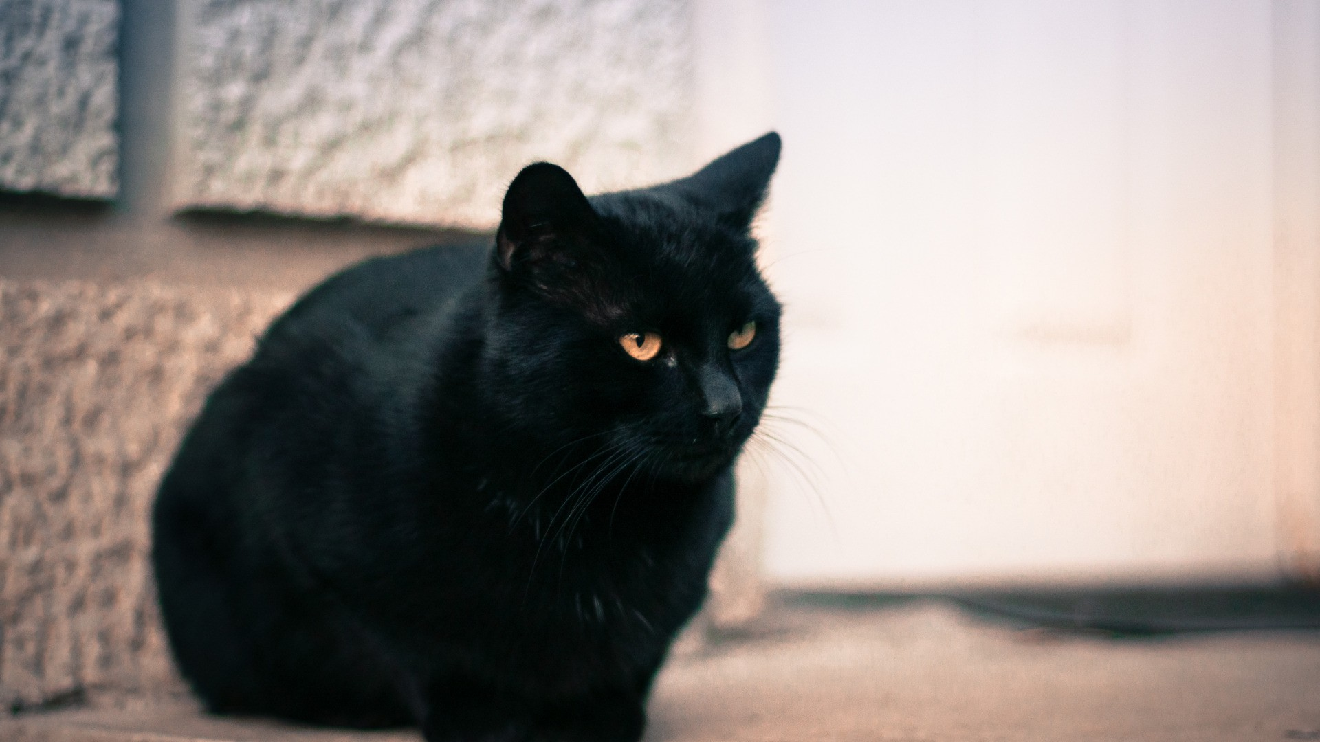 Black Cat wallpaper picture