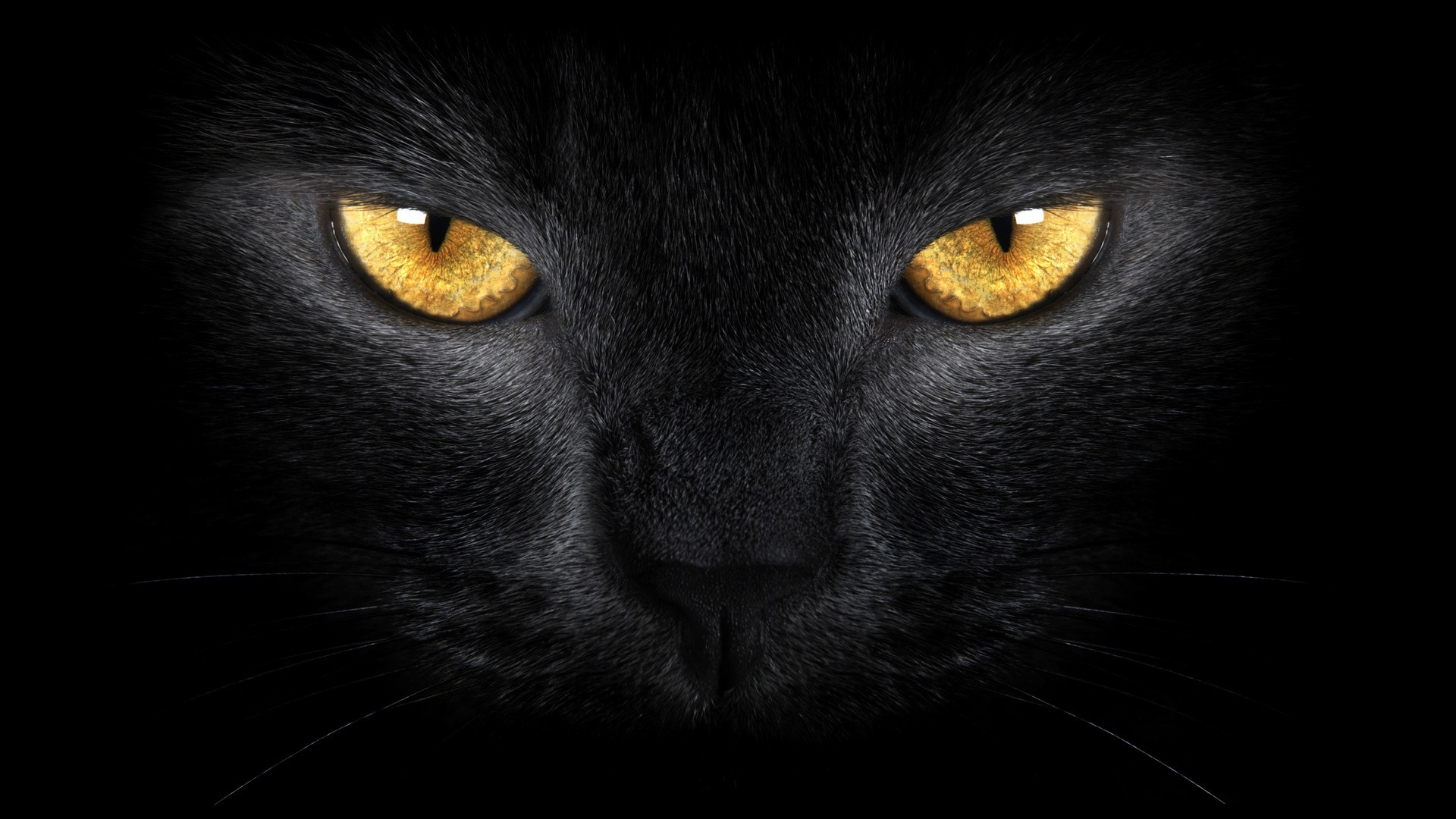 Black Cat wallpaper hd