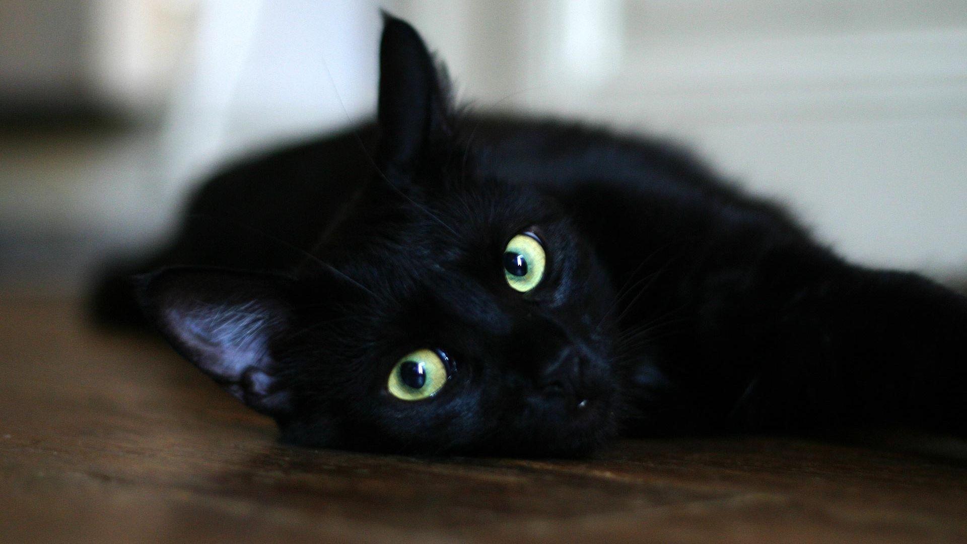 Black Cat background image