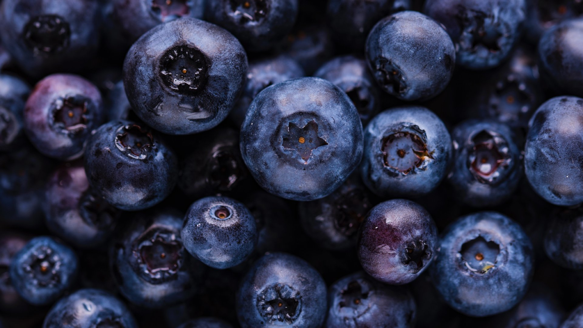 Blueberry Wallpaper Picture