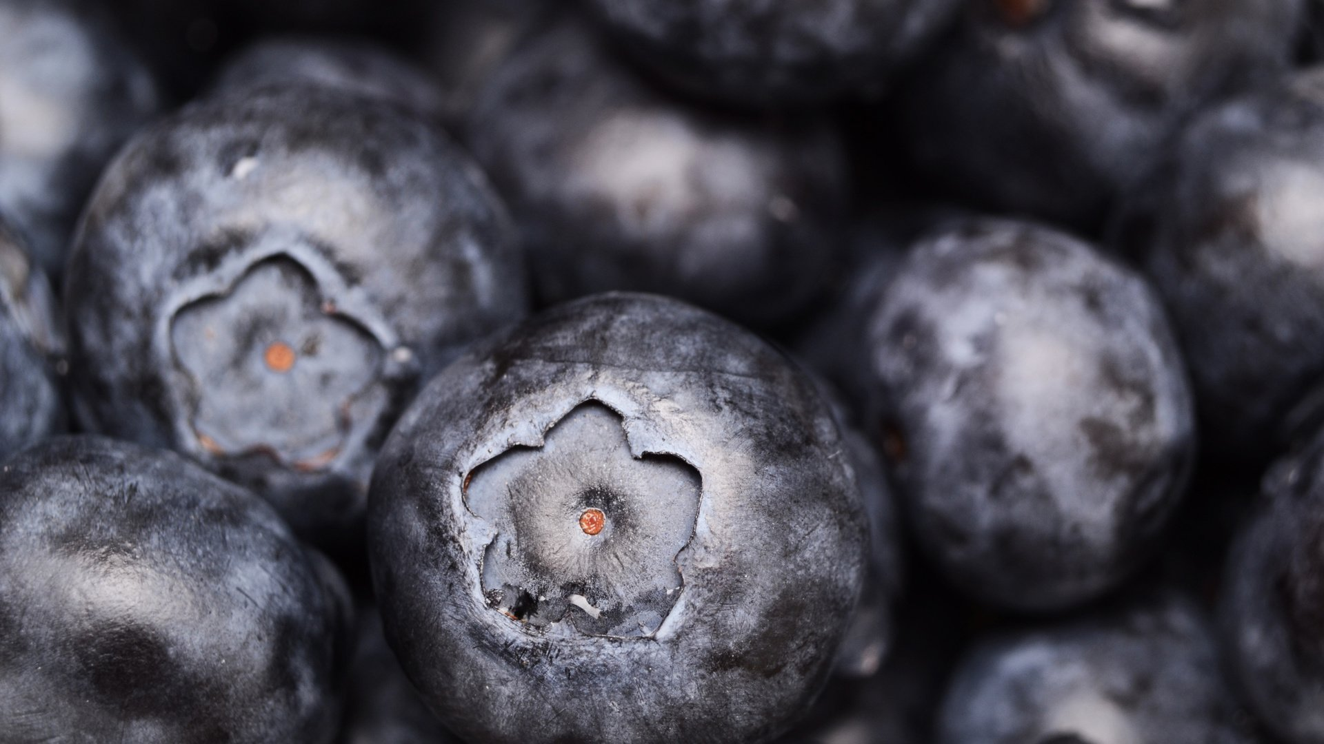 Blueberry download wallpaper image
