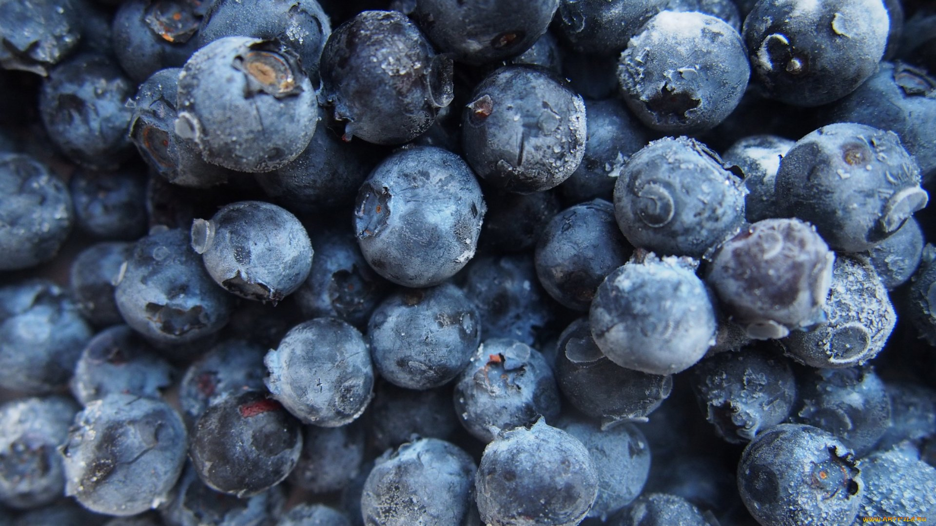 Blueberry Picture