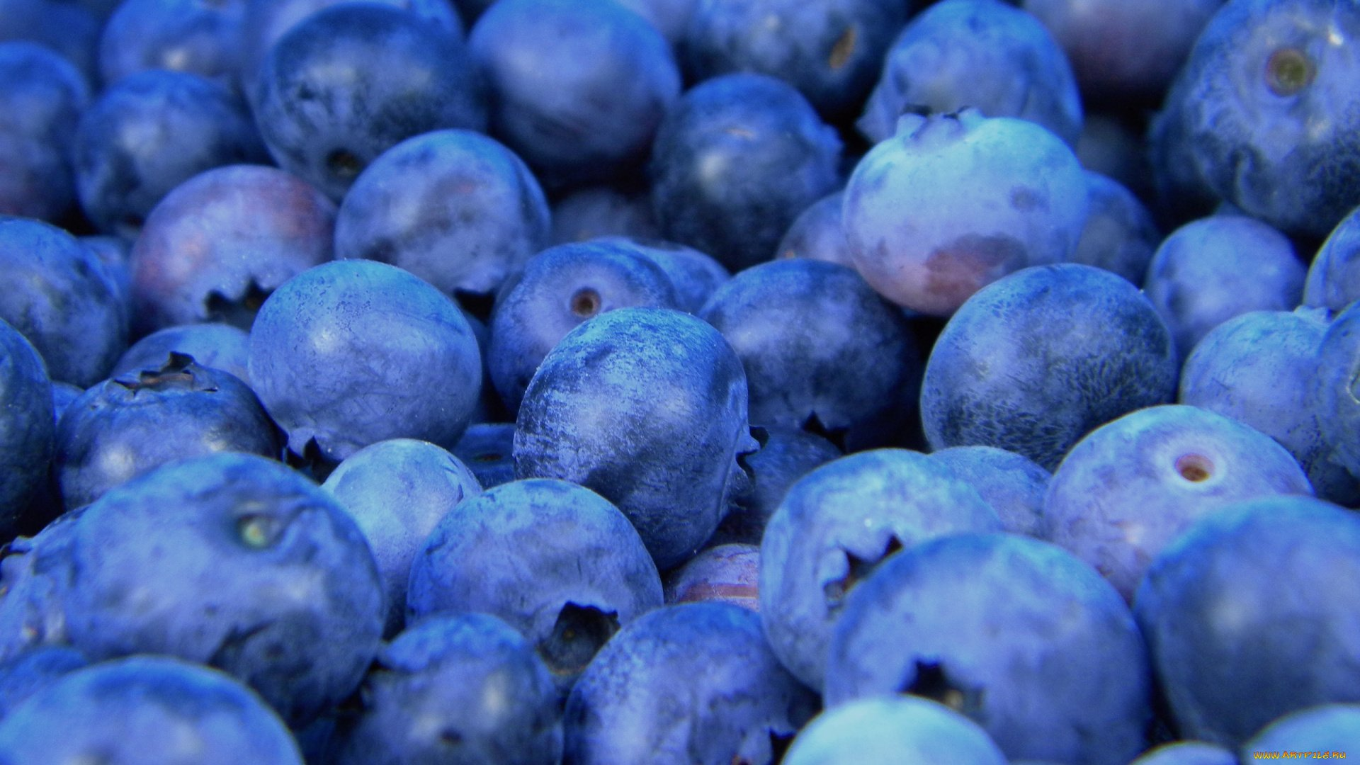 Blueberry Wallpaper and Background