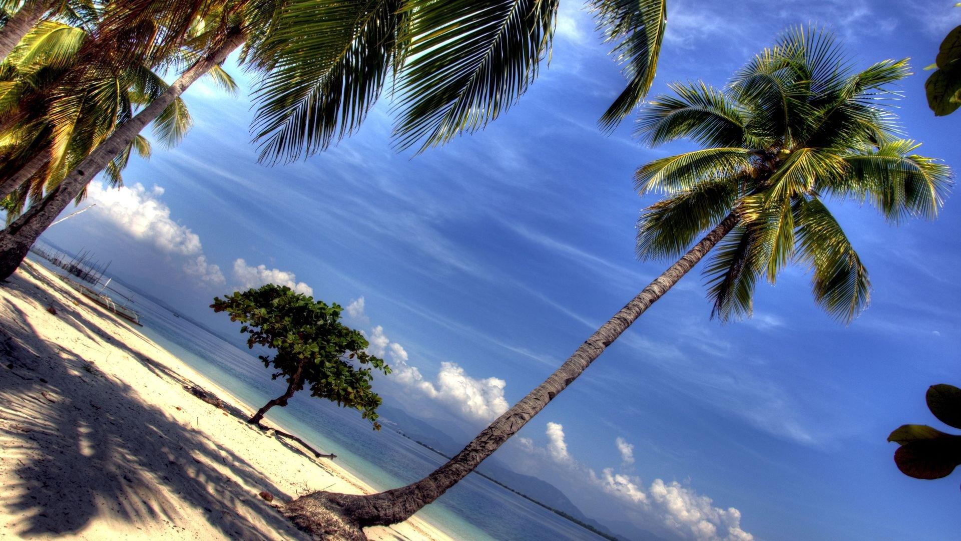 Palm Tree Screensaver hd wallpaper 1080