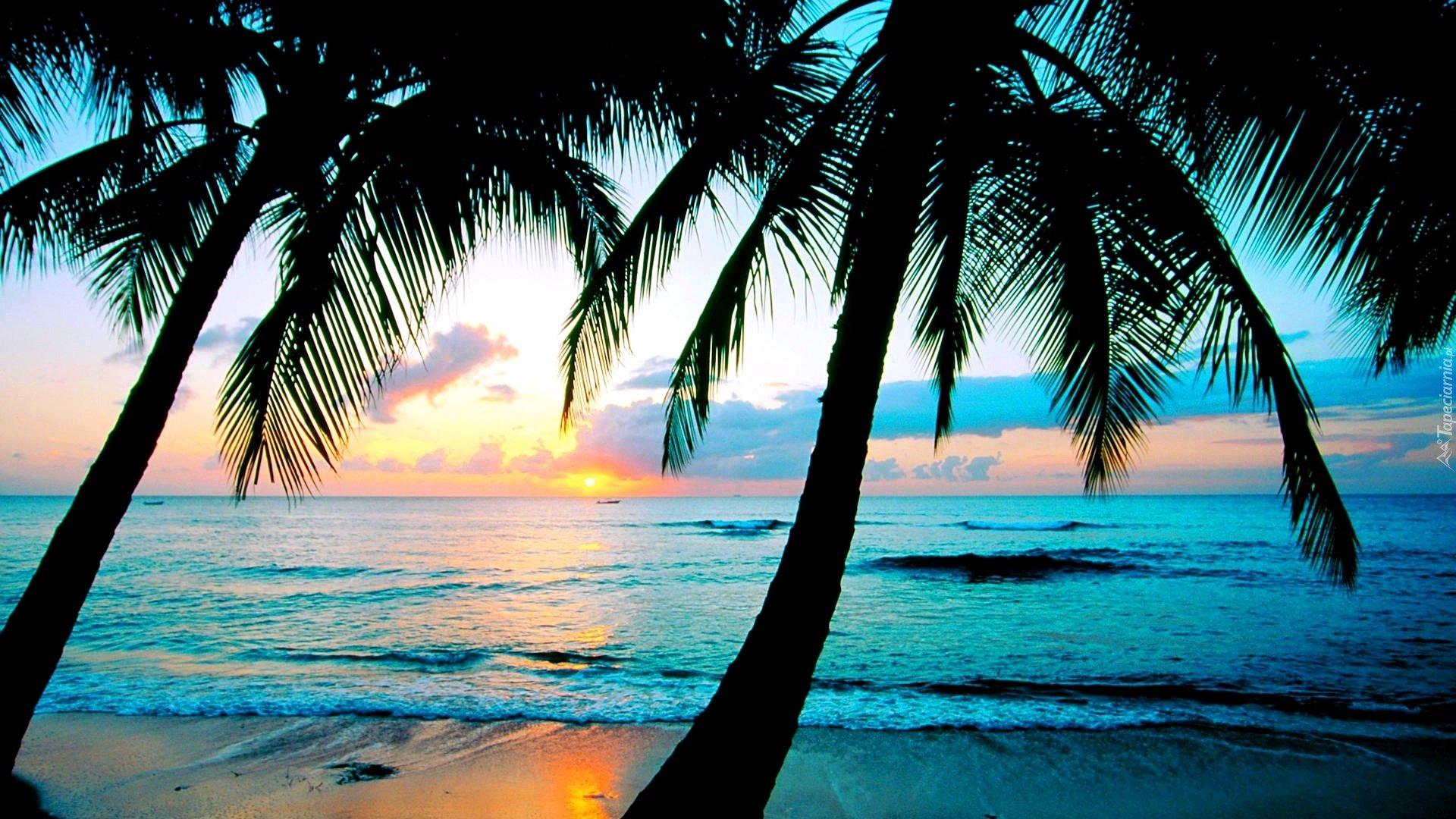 Palm Tree Screensaver Free Desktop Wallpaper