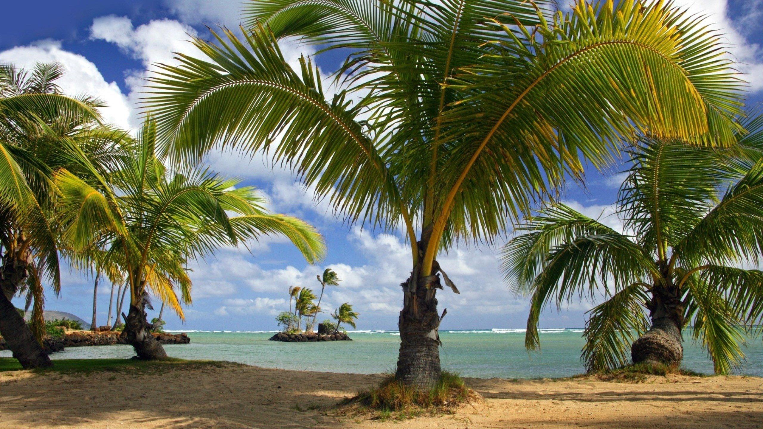 Palm Tree Screensaver Wallpaper