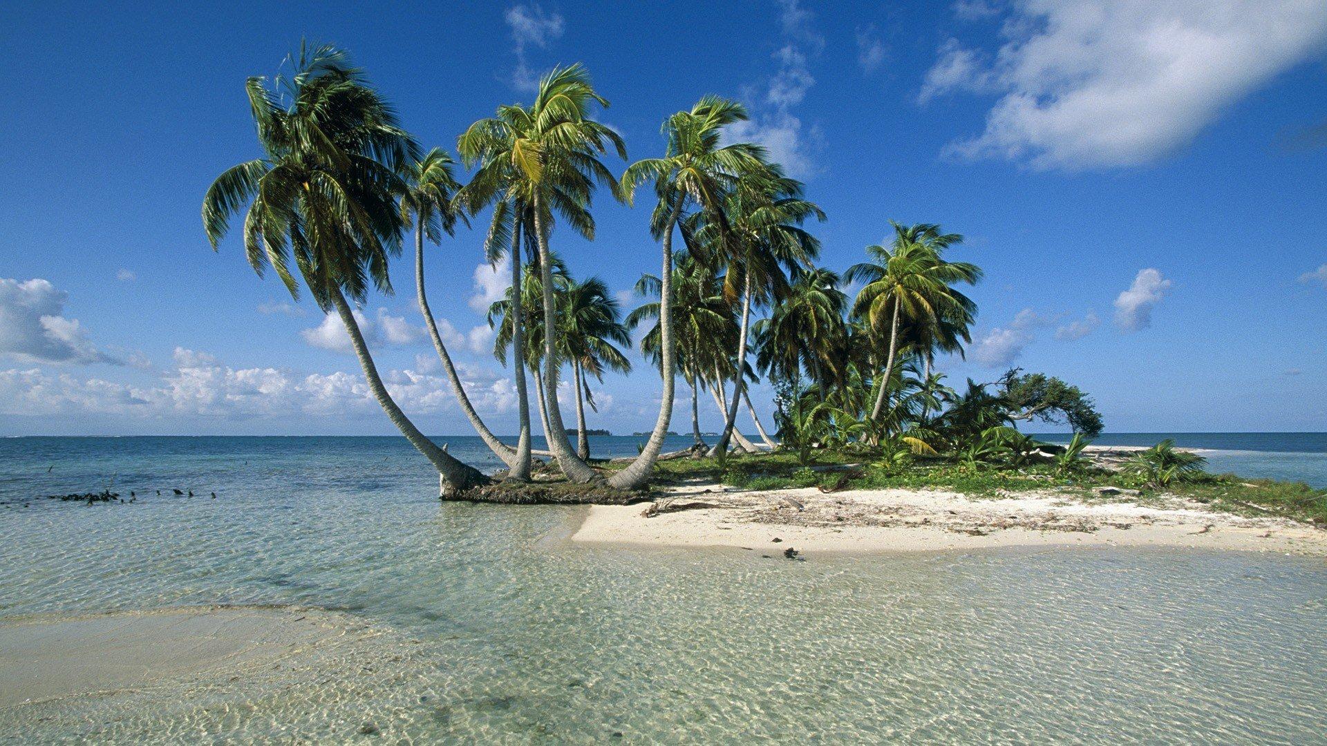 Palm Tree Screensaver 1080p Wallpaper