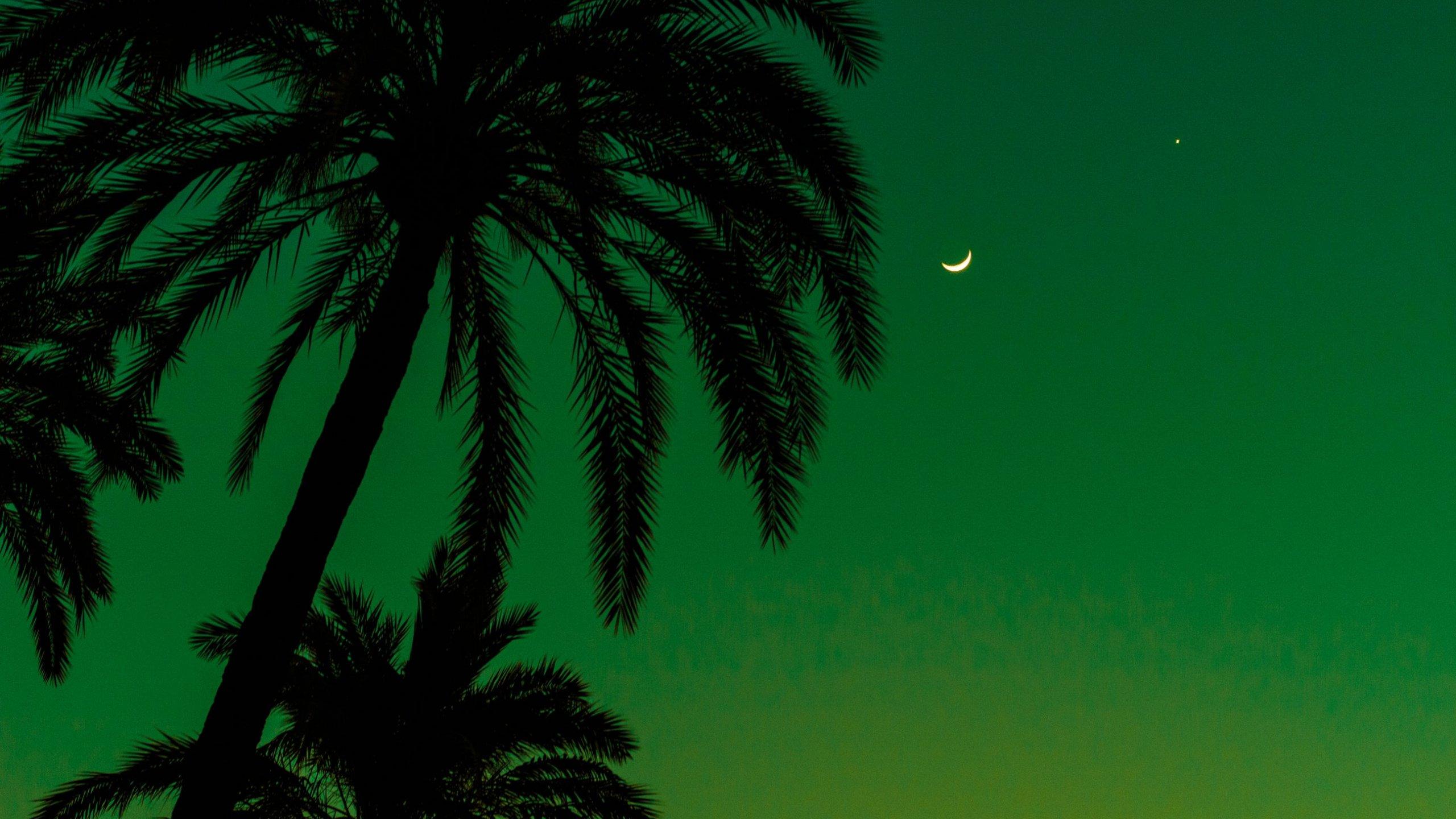 Palm Tree Screensaver HD Download