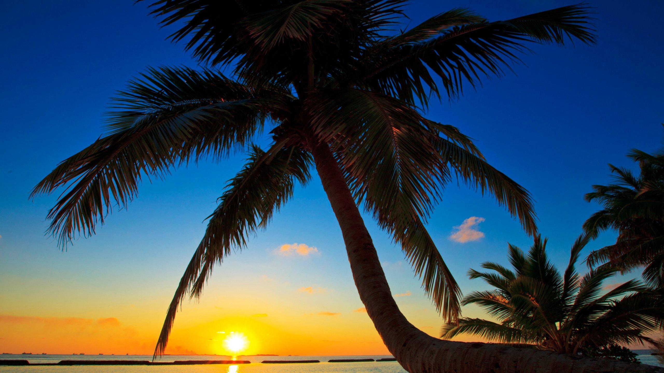 Palm Tree Screensaver Background Wallpaper