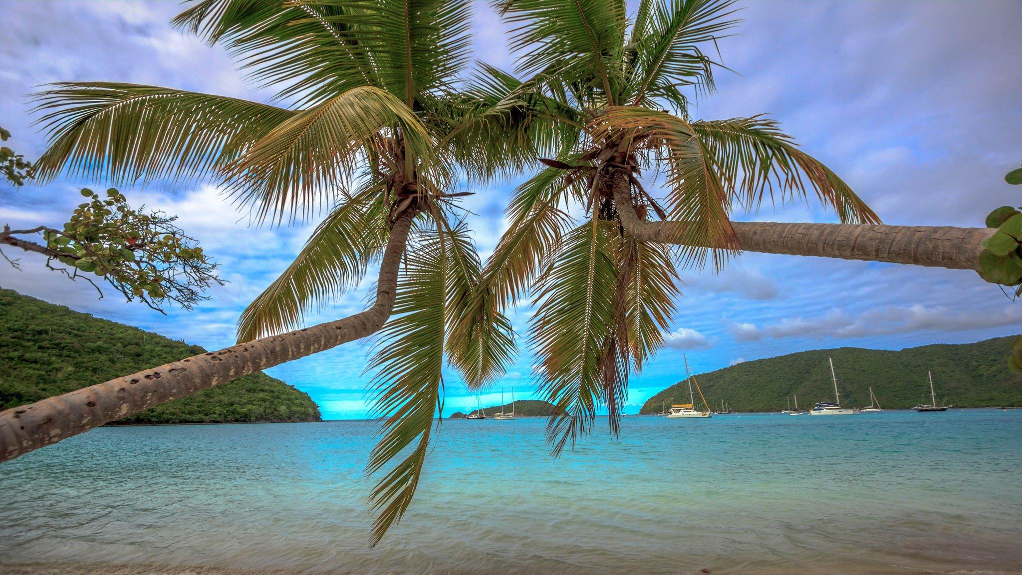 Palm Tree Screensaver HD Desktop Wallpaper