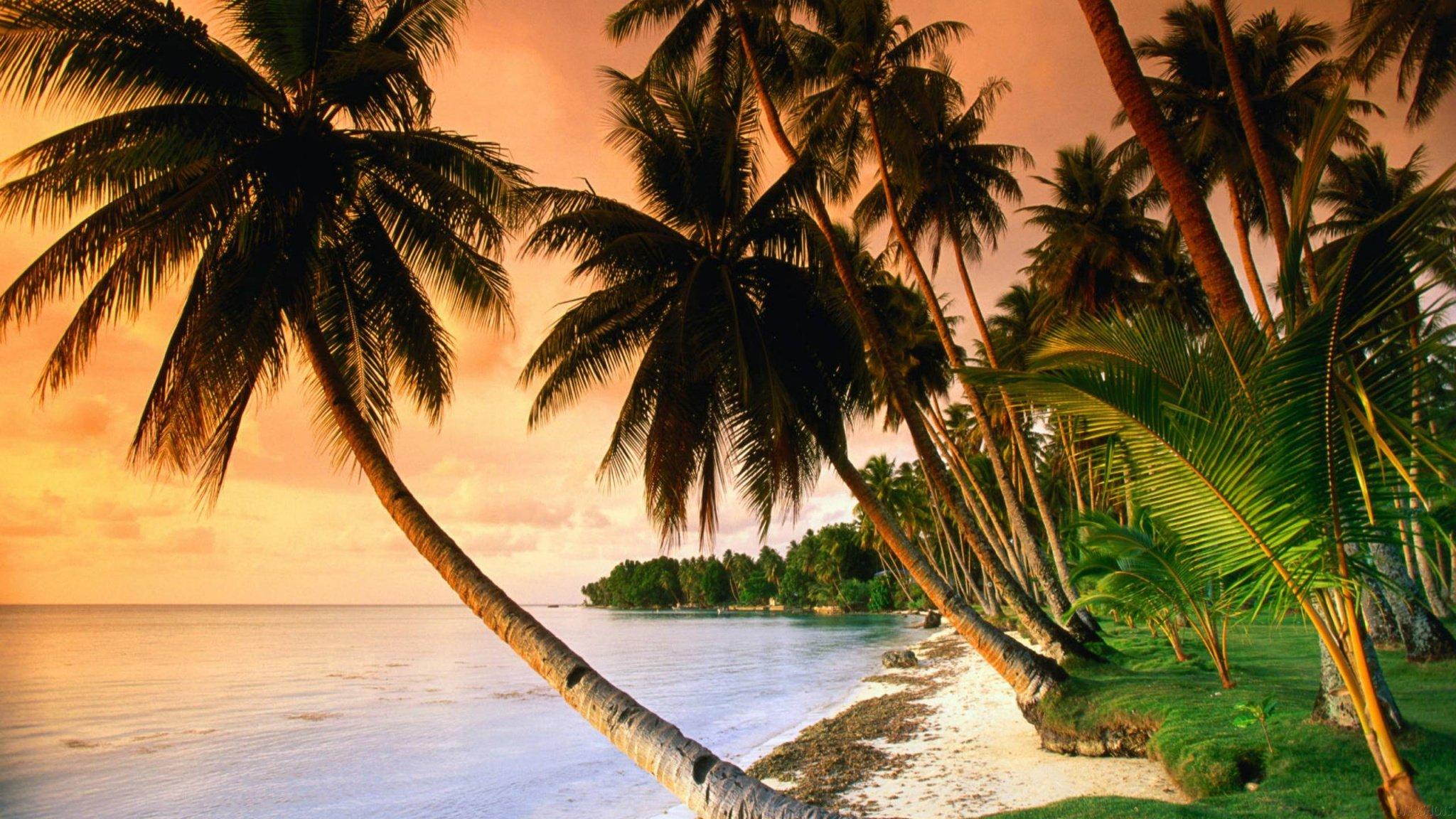 Palm Tree Screensaver High Definition