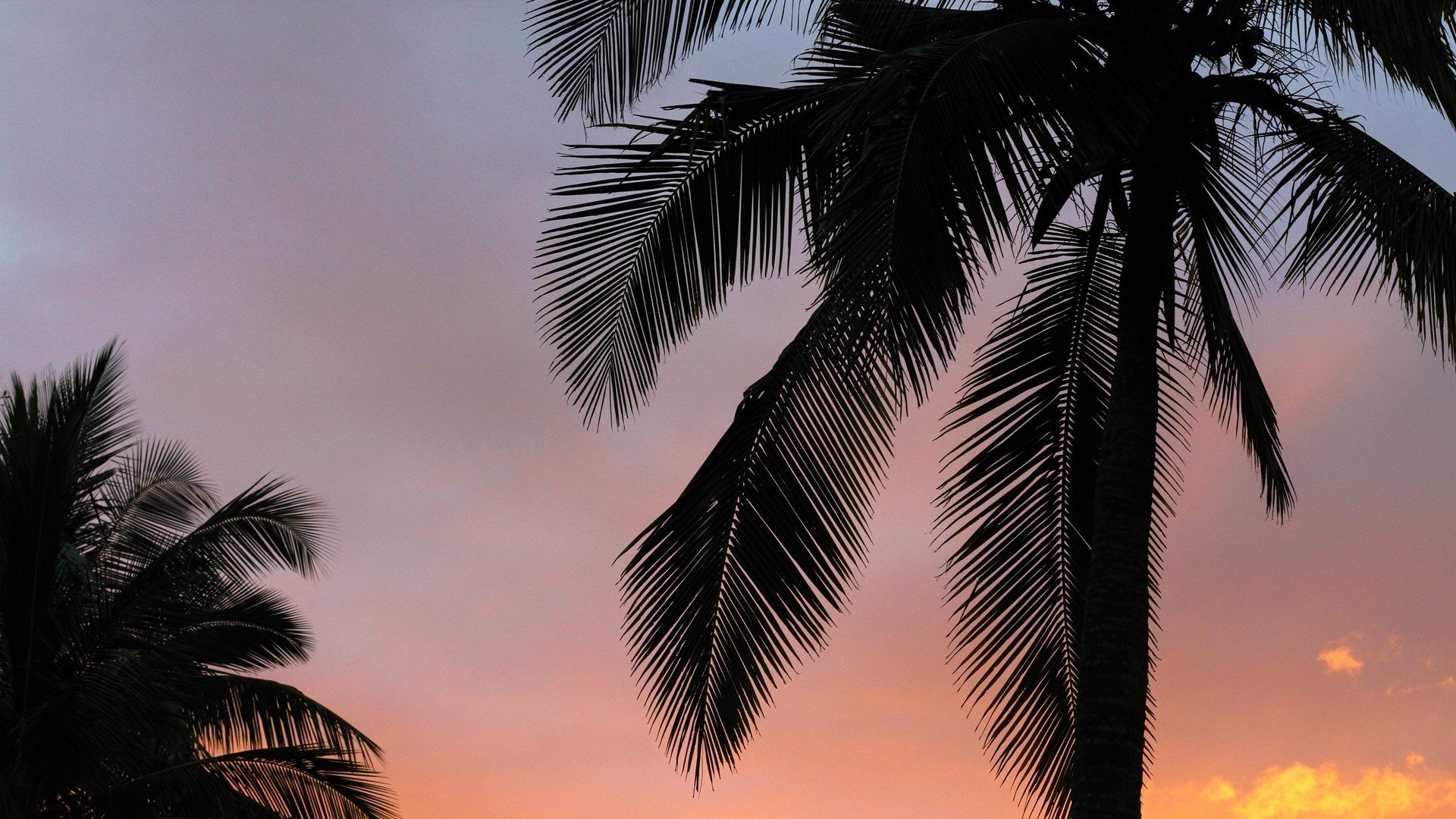 Palm Tree Screensaver hd wallpaper download