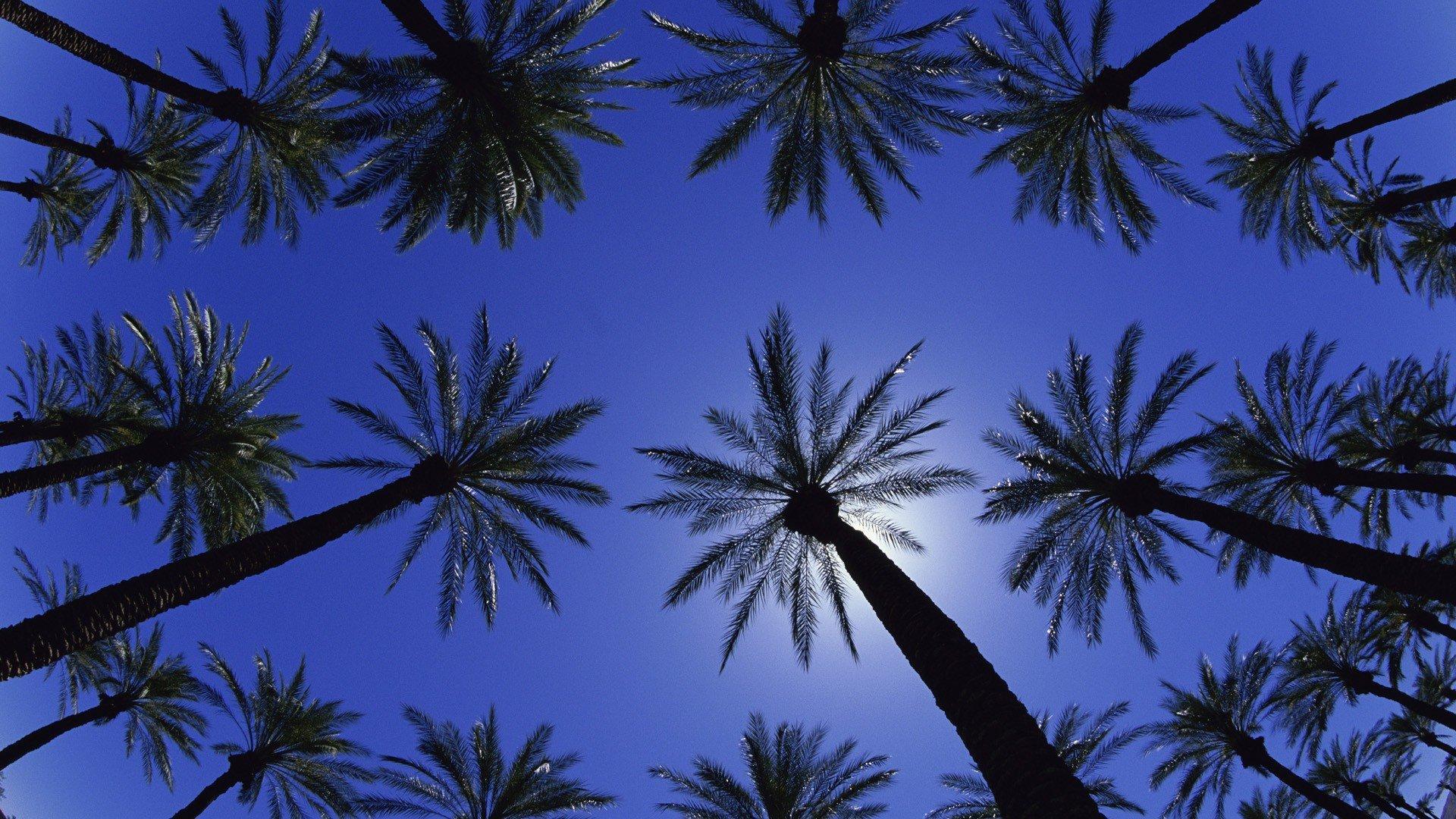 Palm Tree Screensaver computer wallpaper
