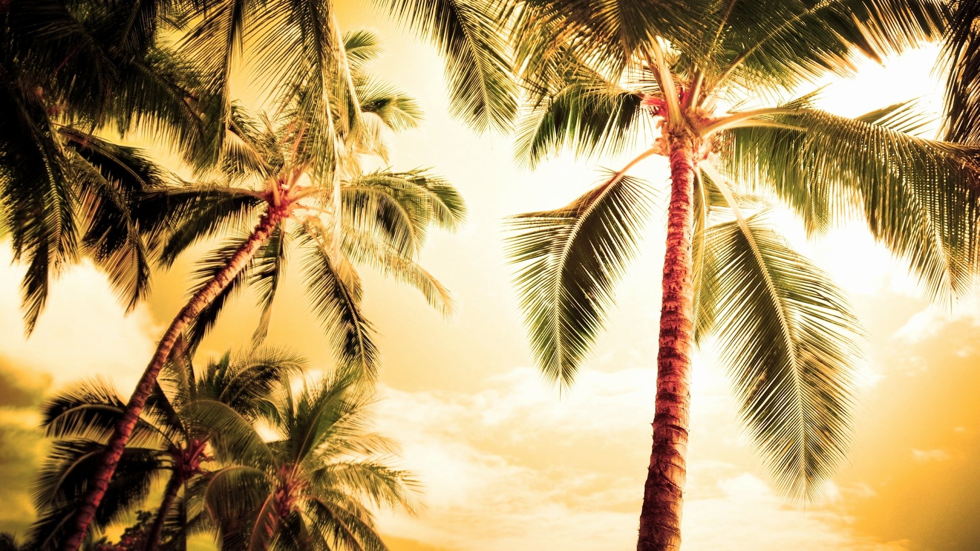 Palm Tree Screensaver wallpaper download