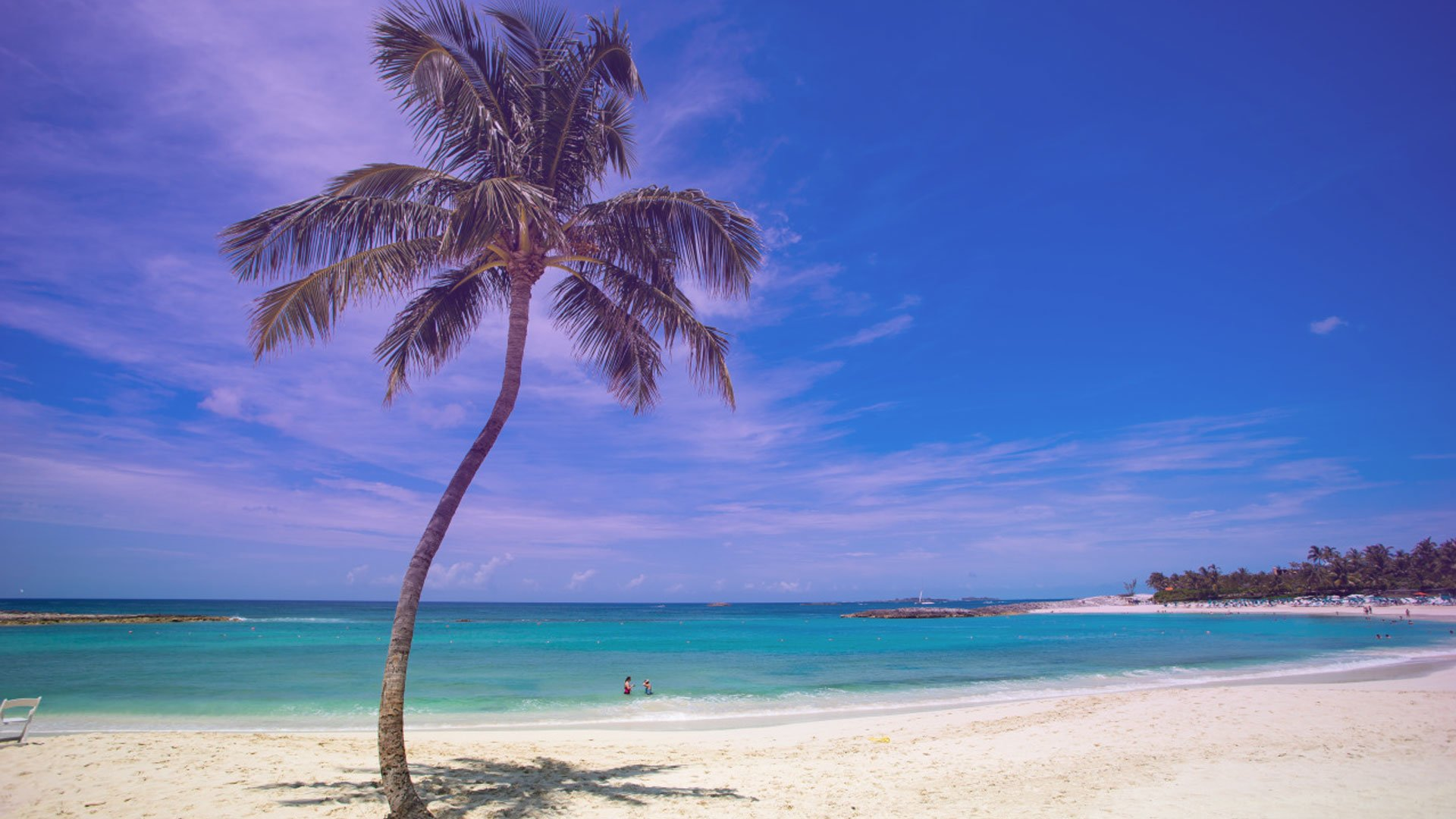 Palm Tree Screensaver wallpaper photo