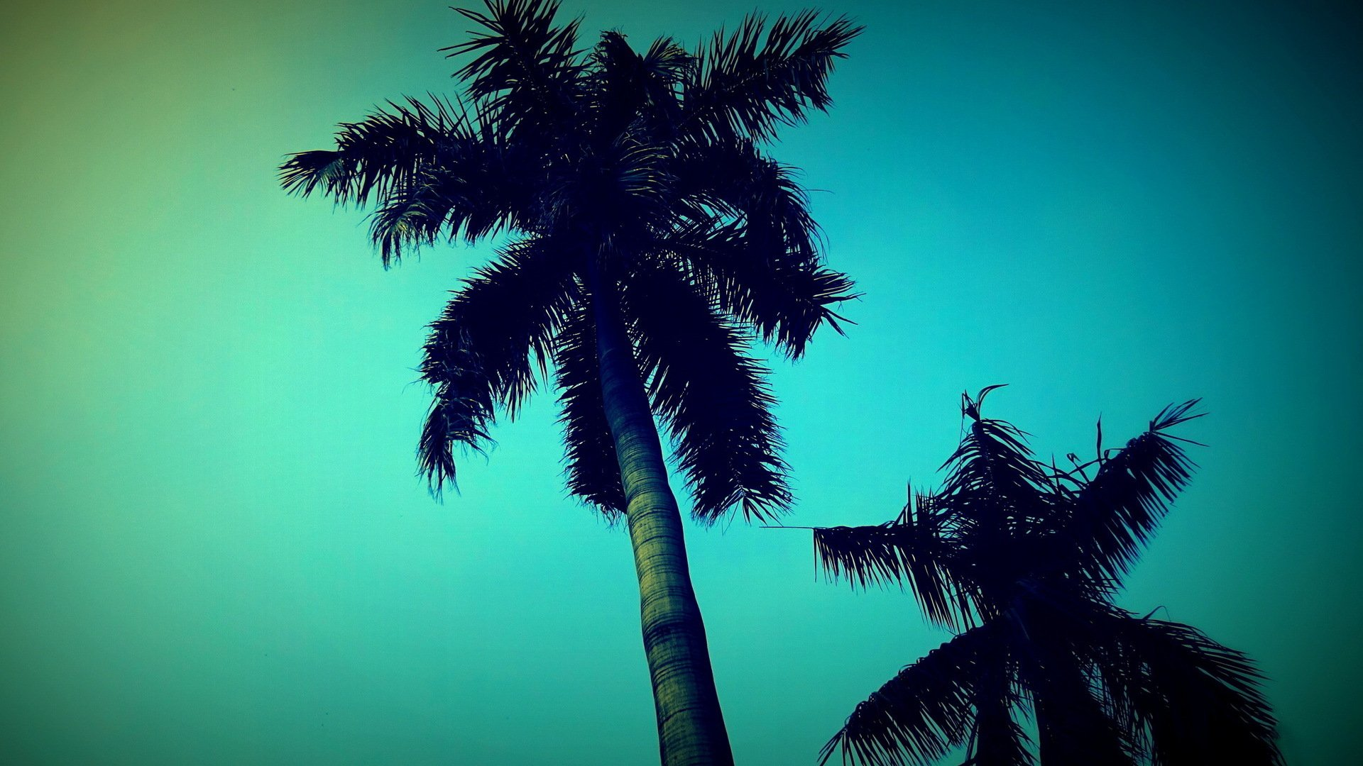 Palm Tree Screensaver Wallpaper and Background