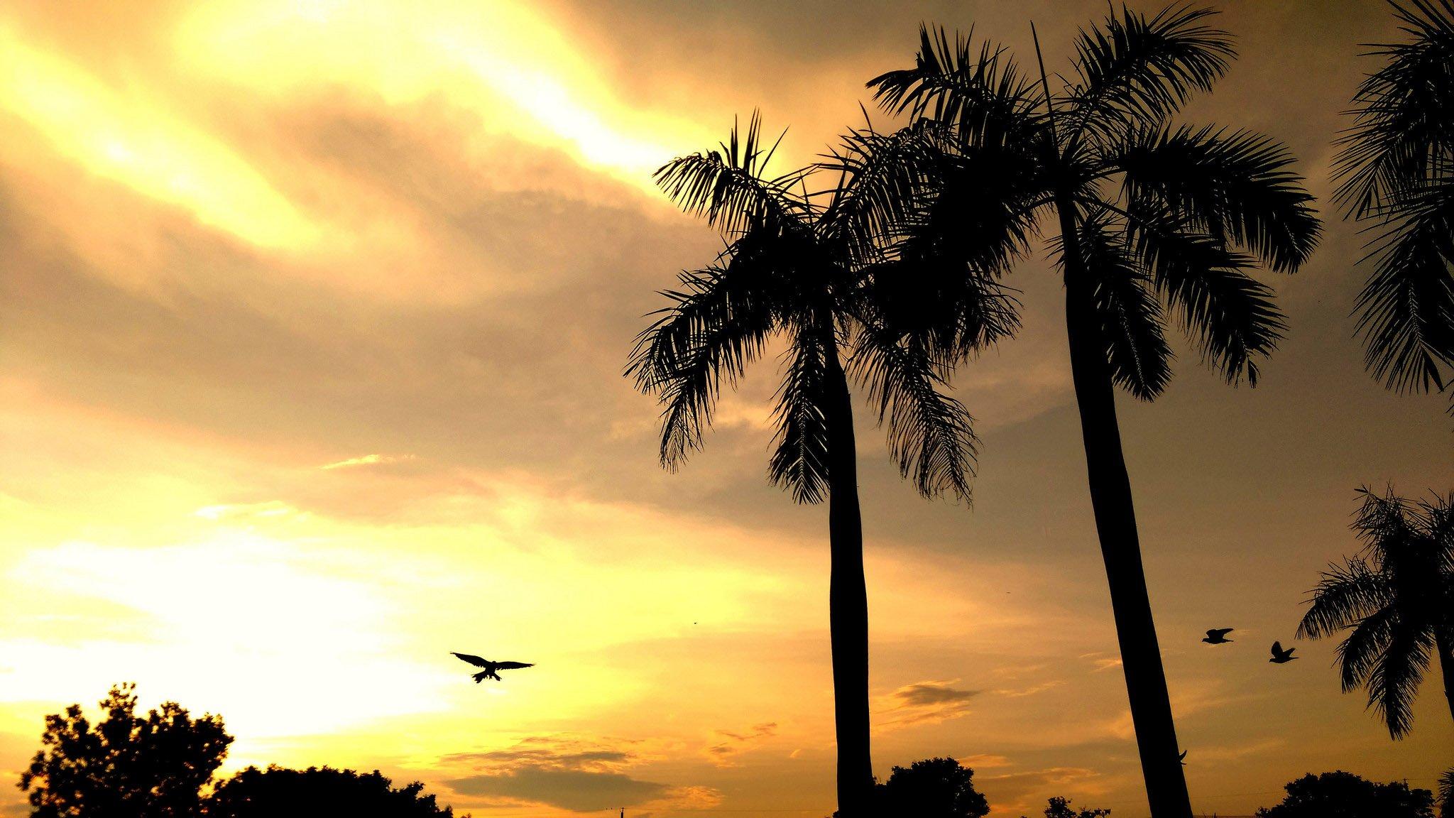 Palm Tree Screensaver full screen hd wallpaper
