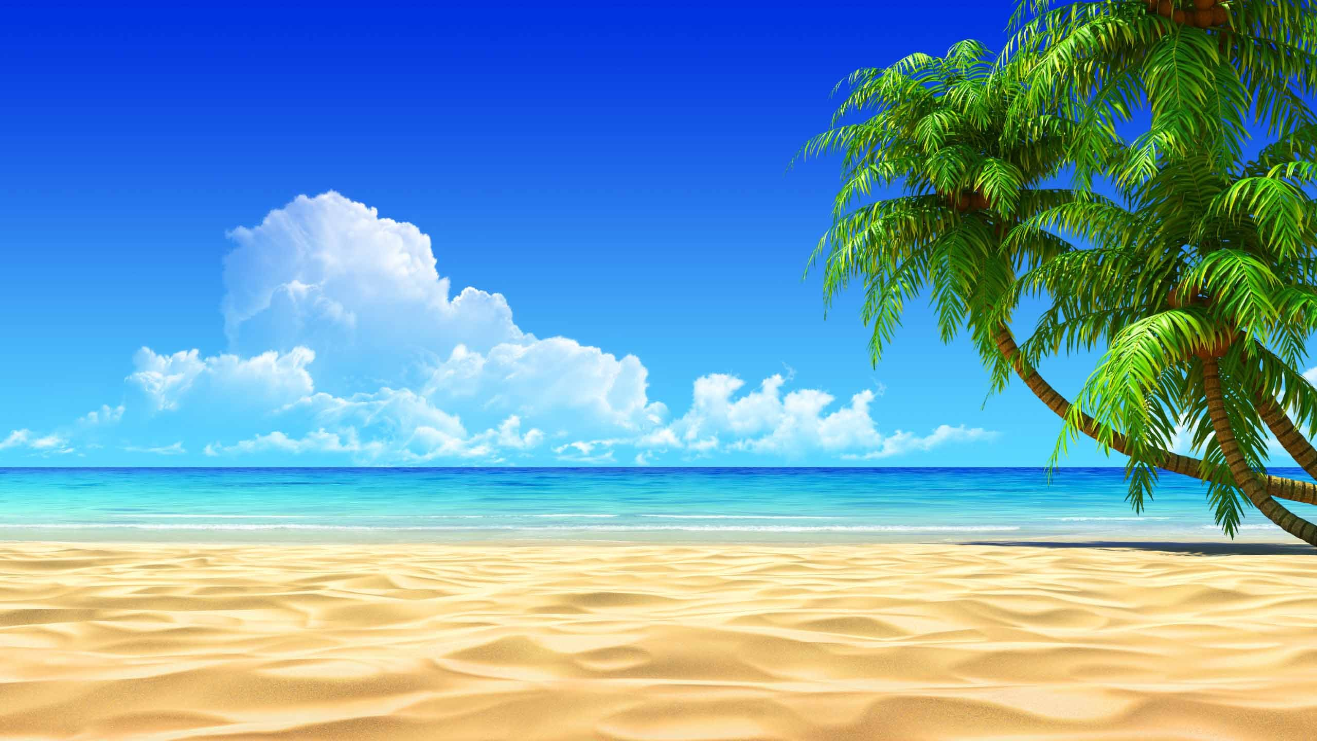 Palm Tree Screensaver Download Wallpaper