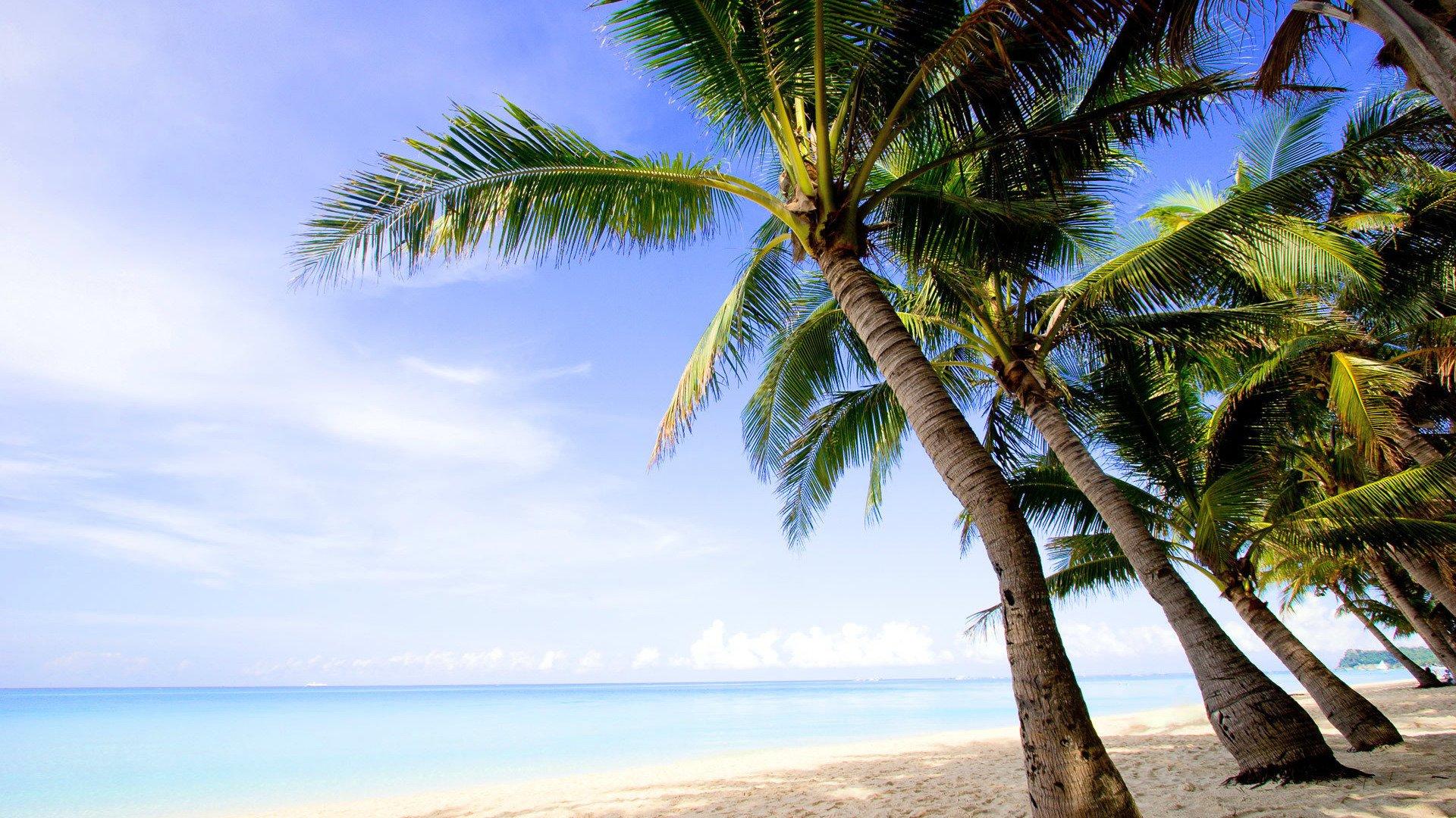 Palm Tree Screensaver HD 1080 wallpaper