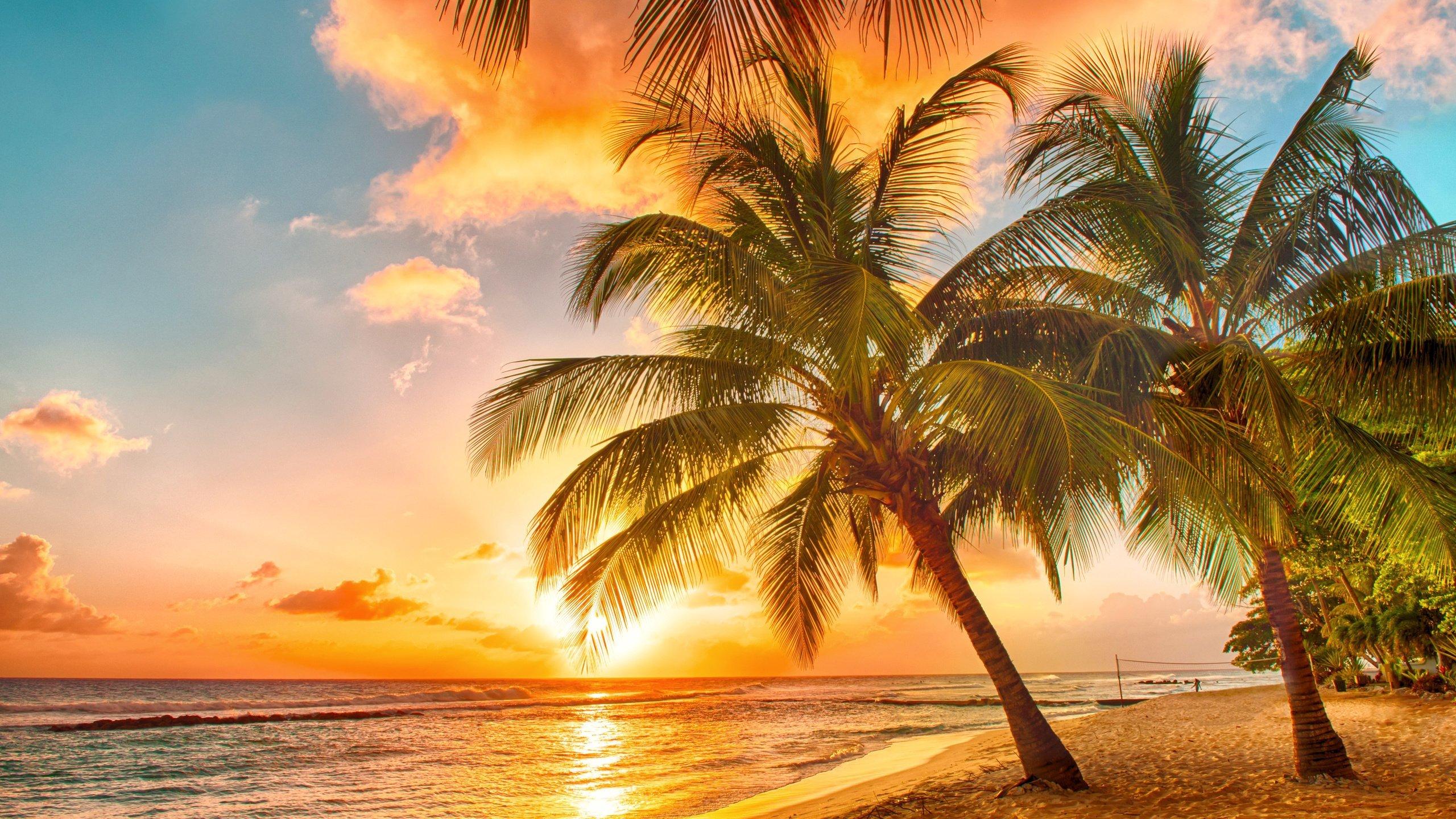 Palm Tree Screensaver a wallpaper