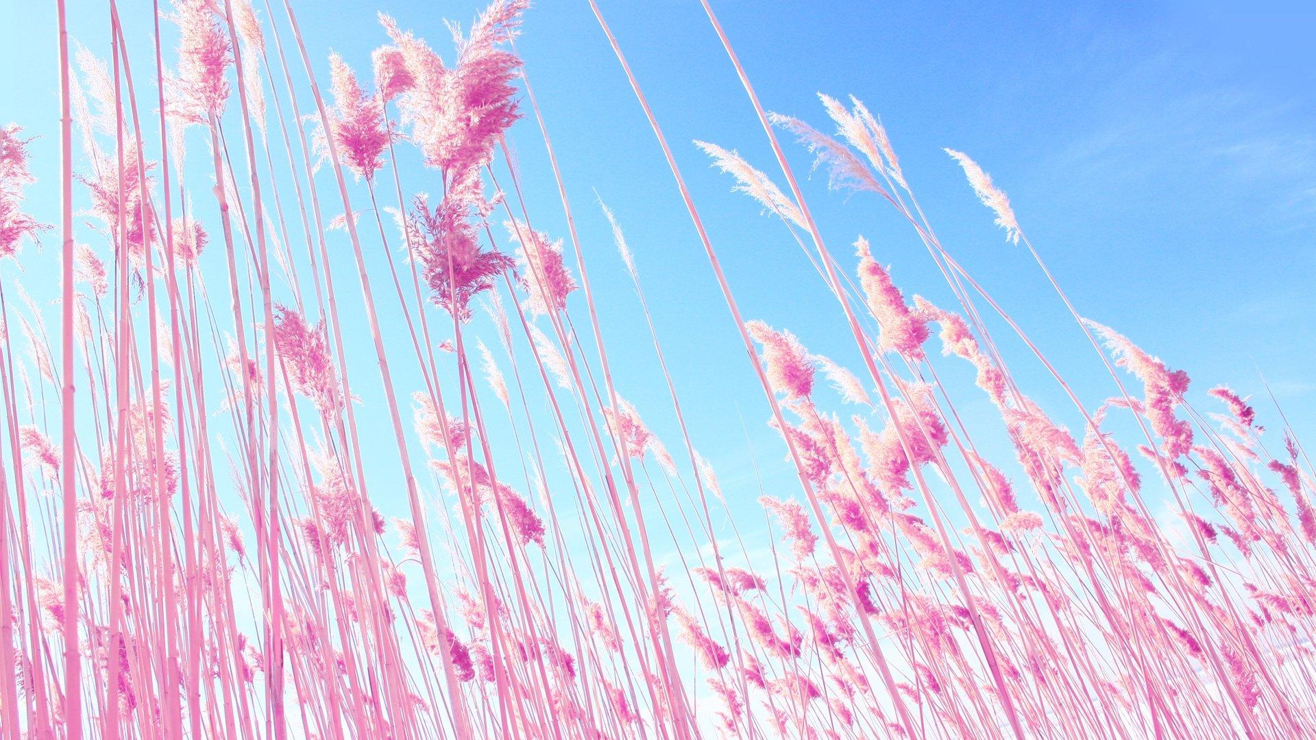 Pink Sky wallpaper photo hd