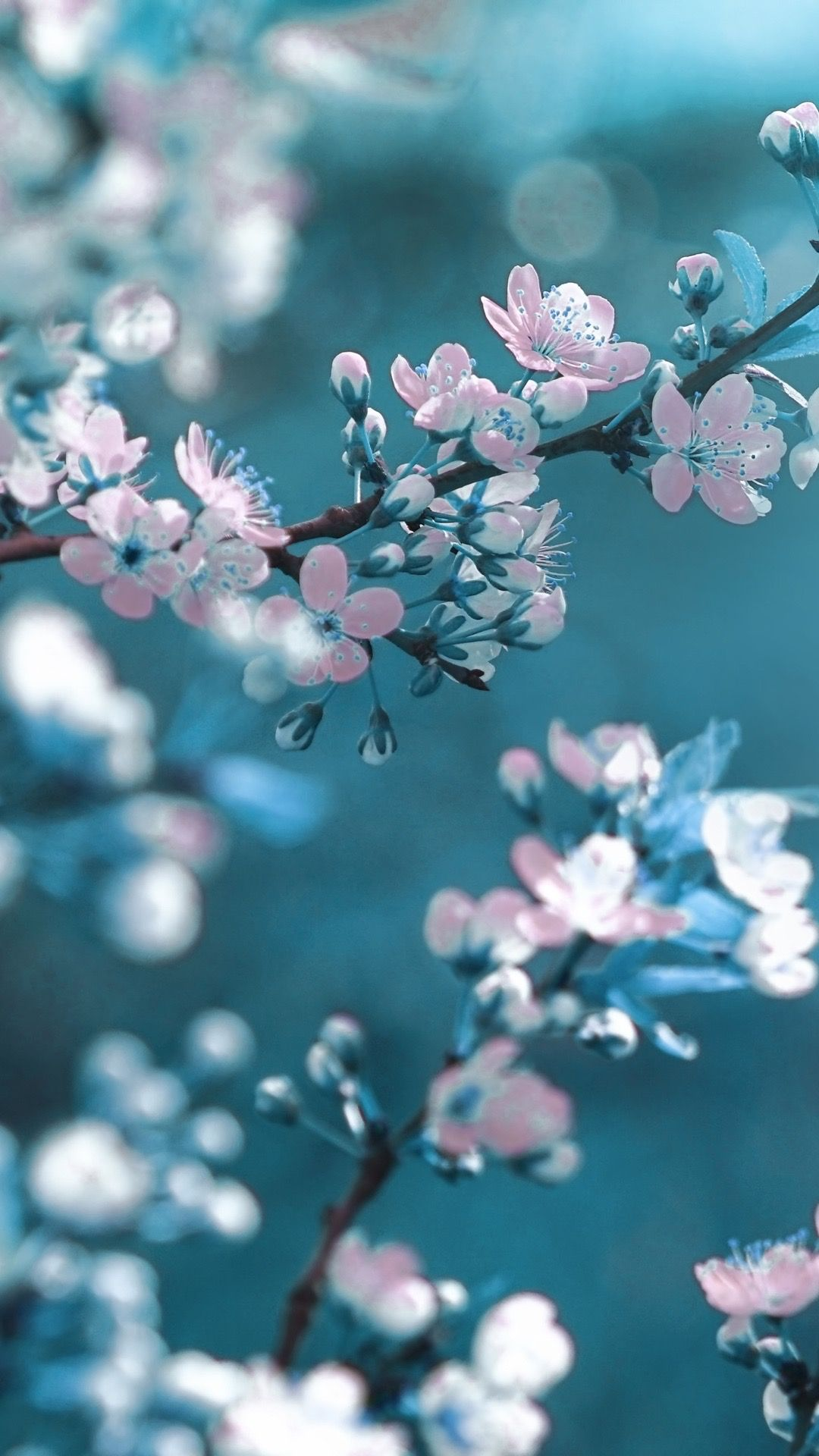Spring iPhone wallpaper high quality