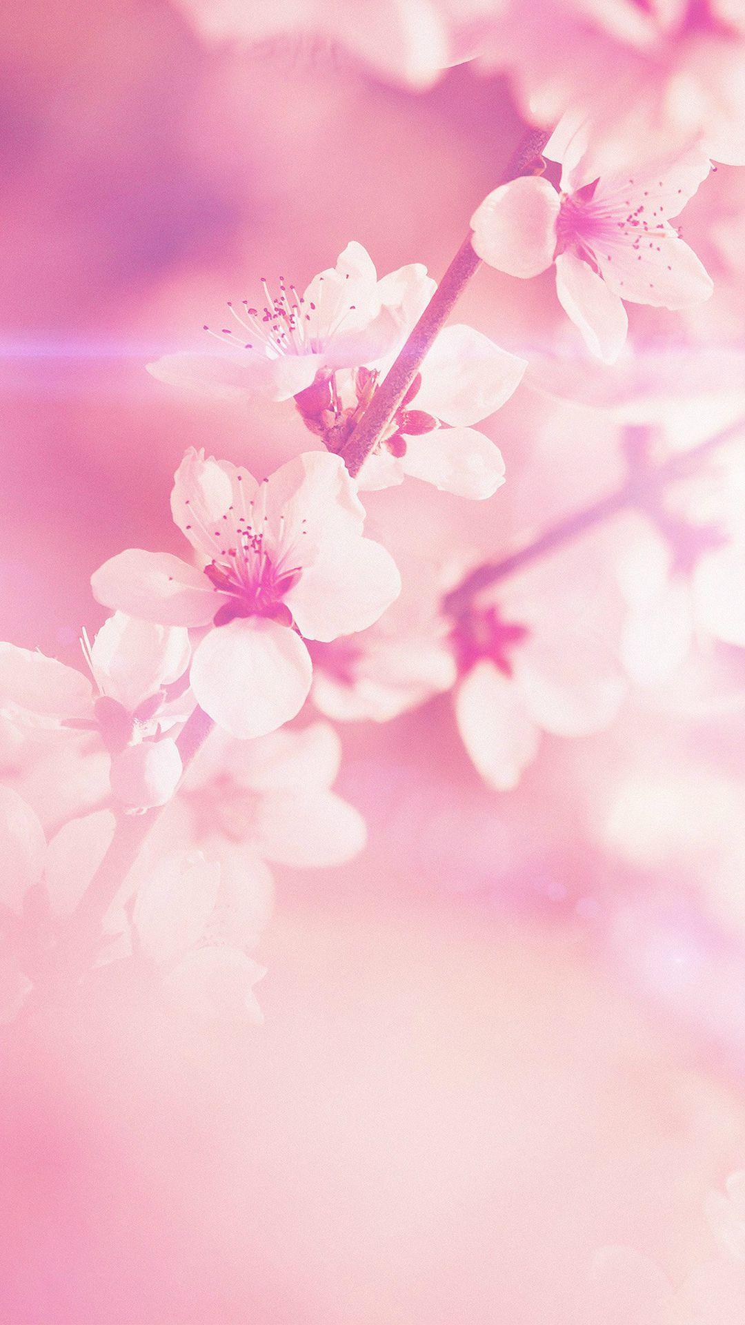 Spring wallpaper iPhone 5