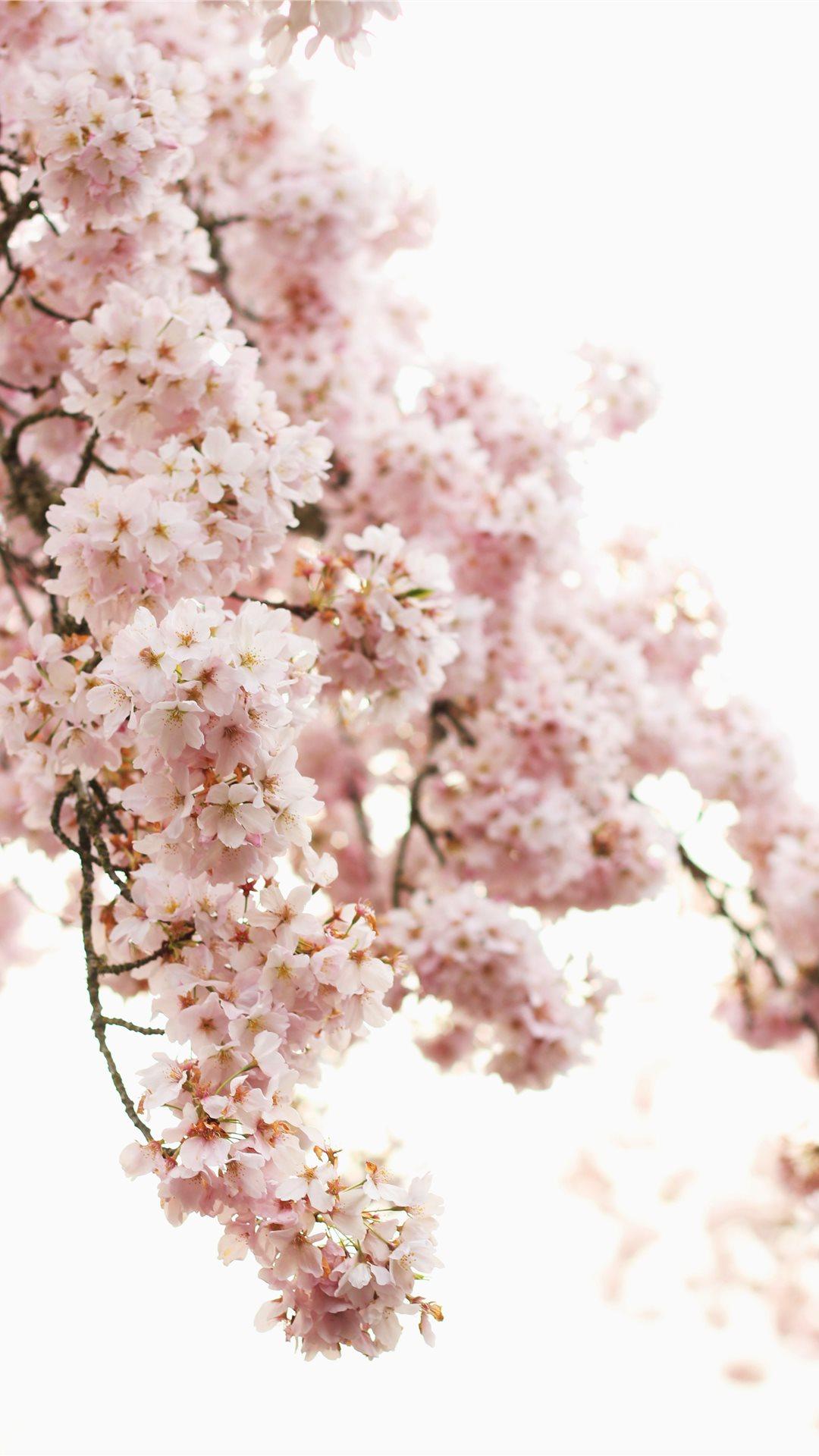 Spring Apple wallpaper