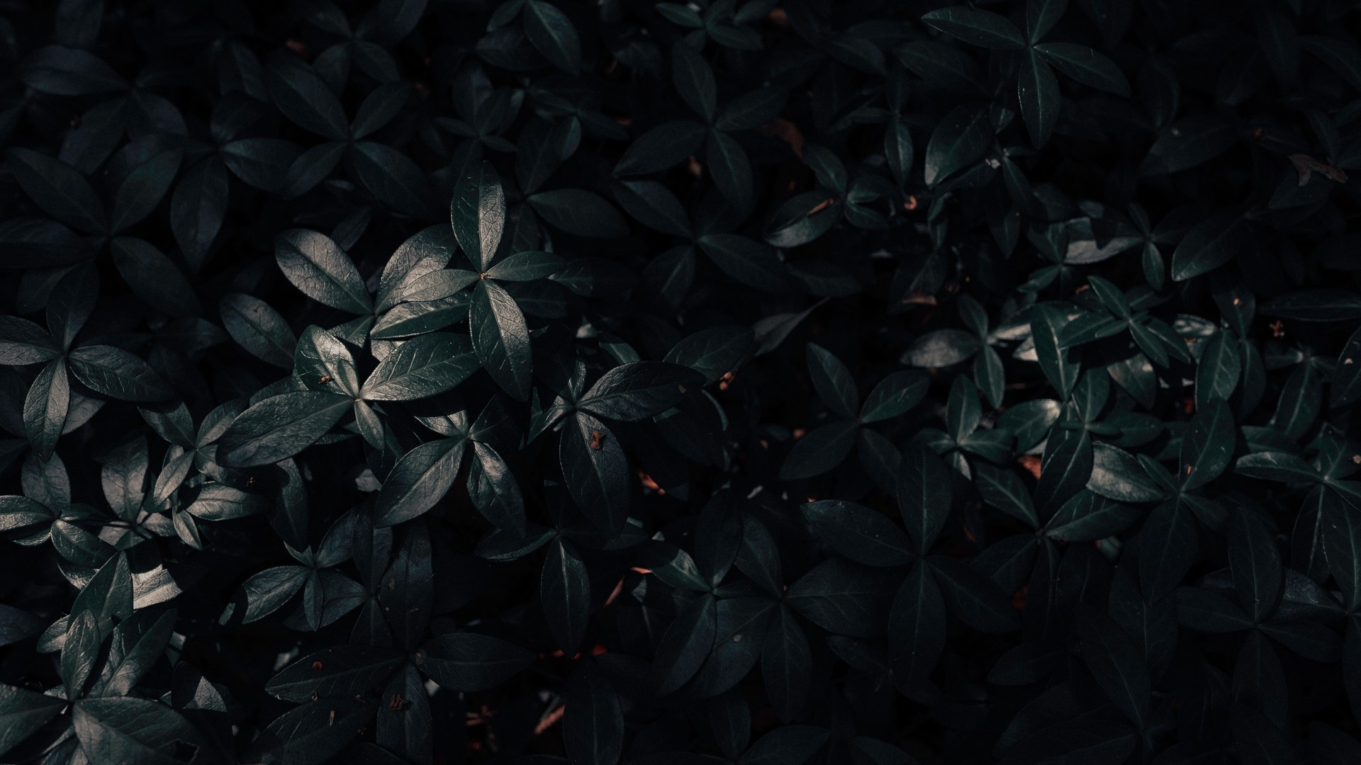 Aesthetic Black Wallpapers 20 Images Wallpaperboat