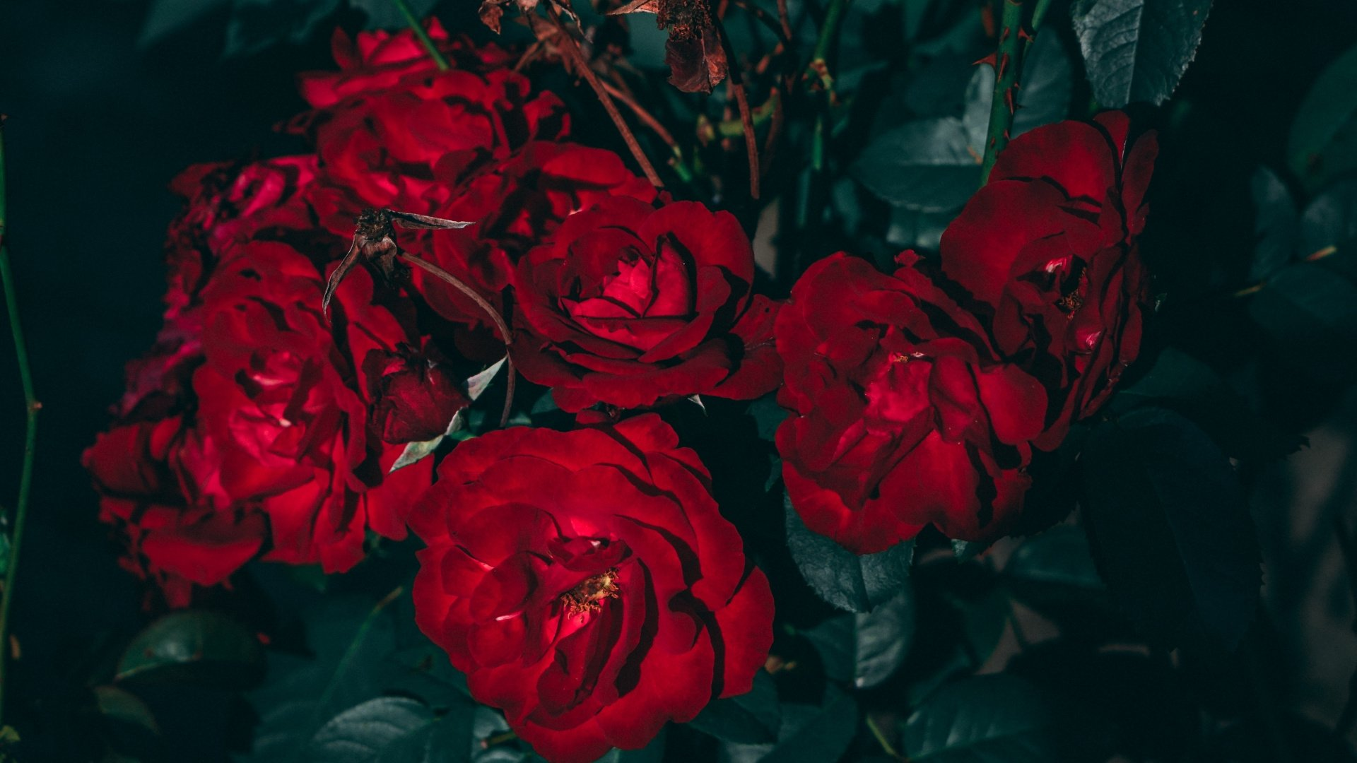 Aesthetic Rose Wallpaper For Pc