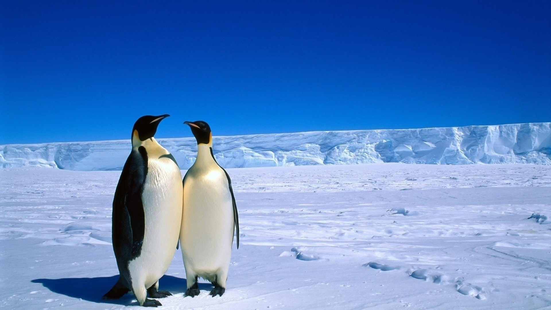 Antarctica wallpaper download
