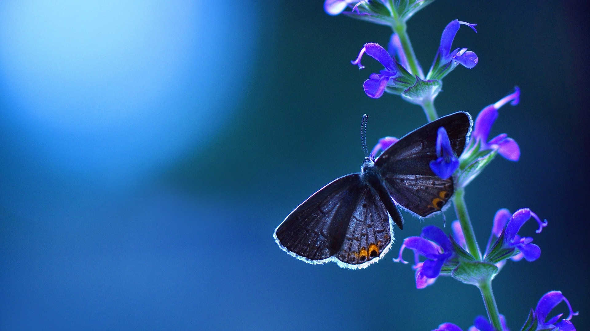 Blue Butterfly Good Wallpaper