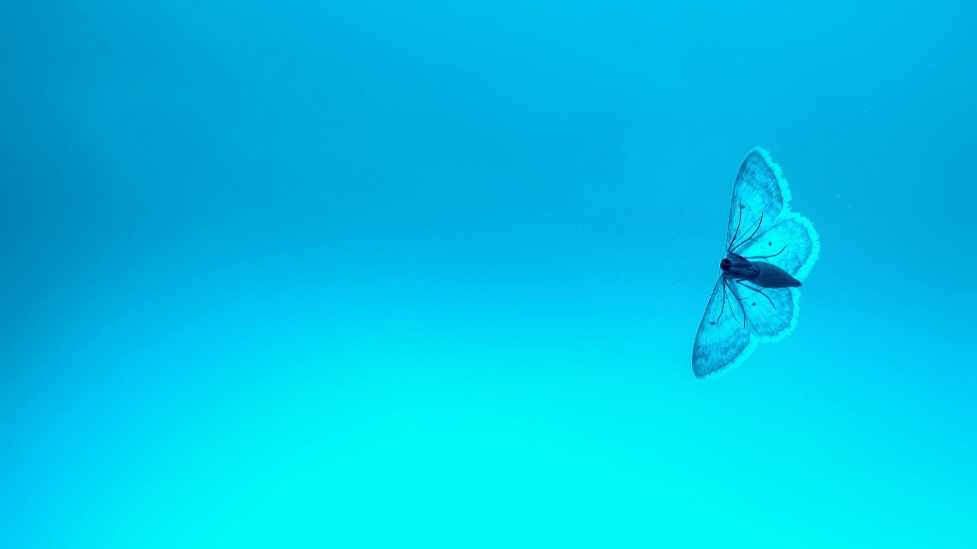 Blue Butterfly HD Download