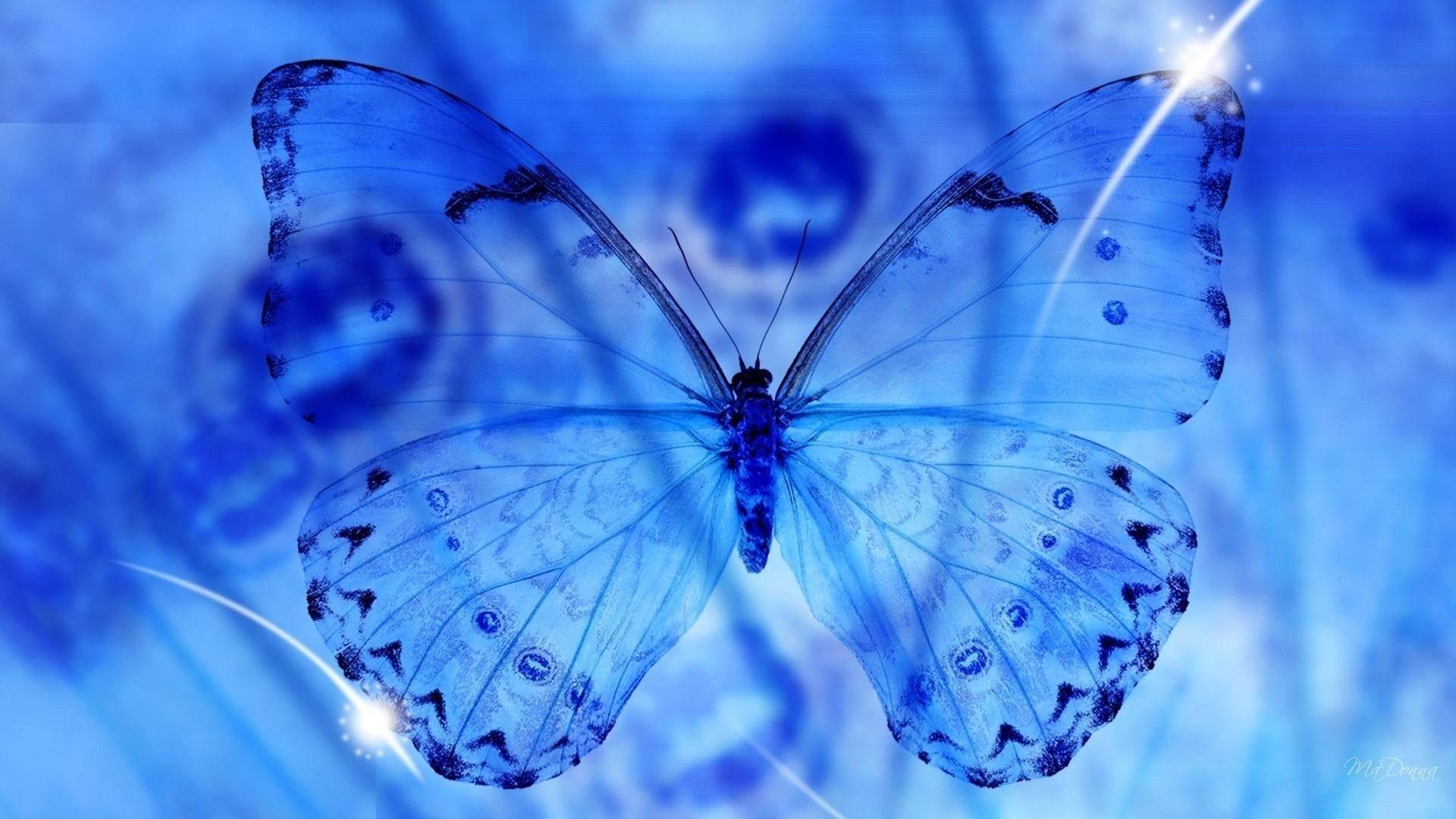 Blue Butterfly computer wallpaper