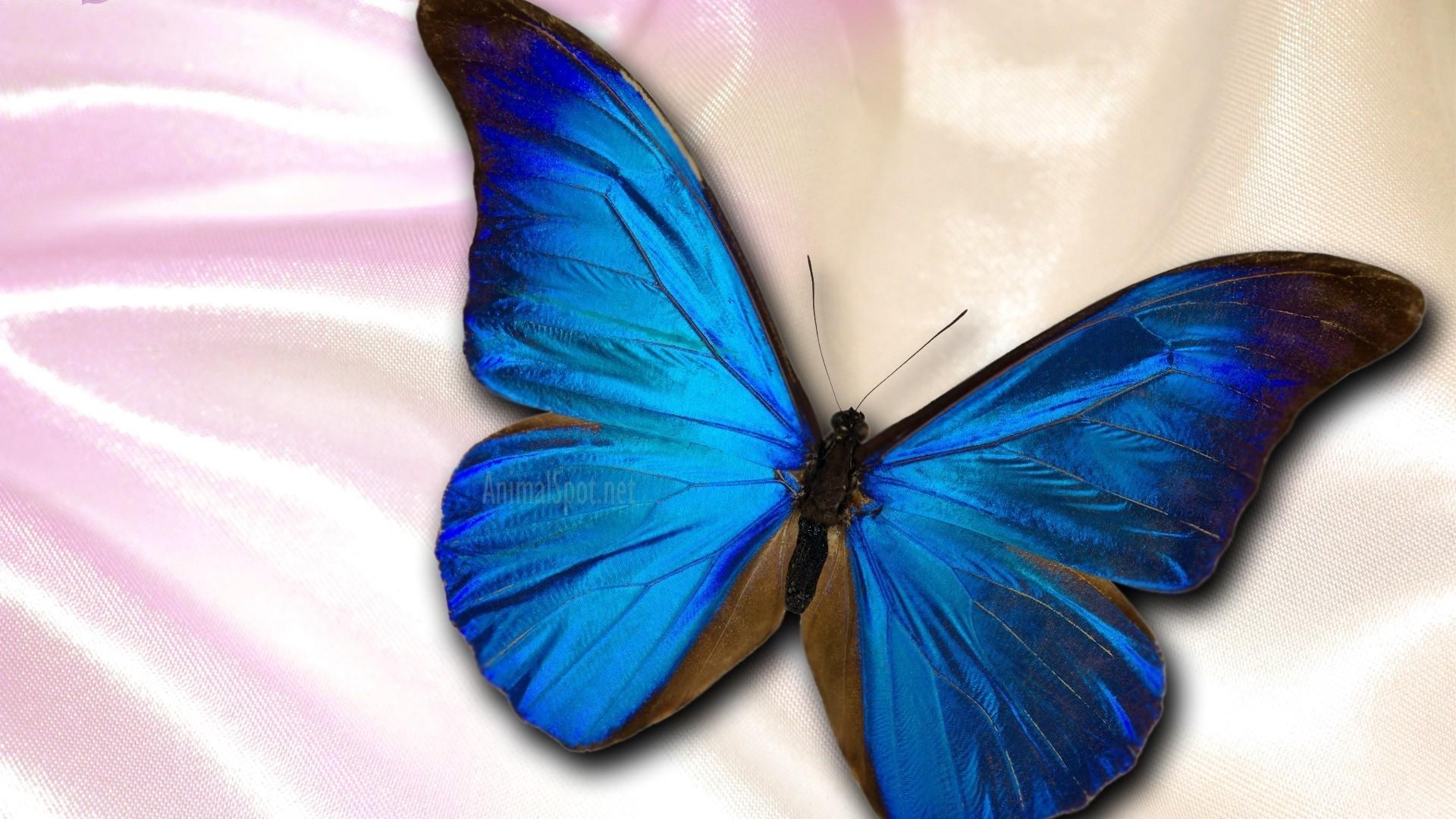 Blue Butterfly wallpaper photo full hd