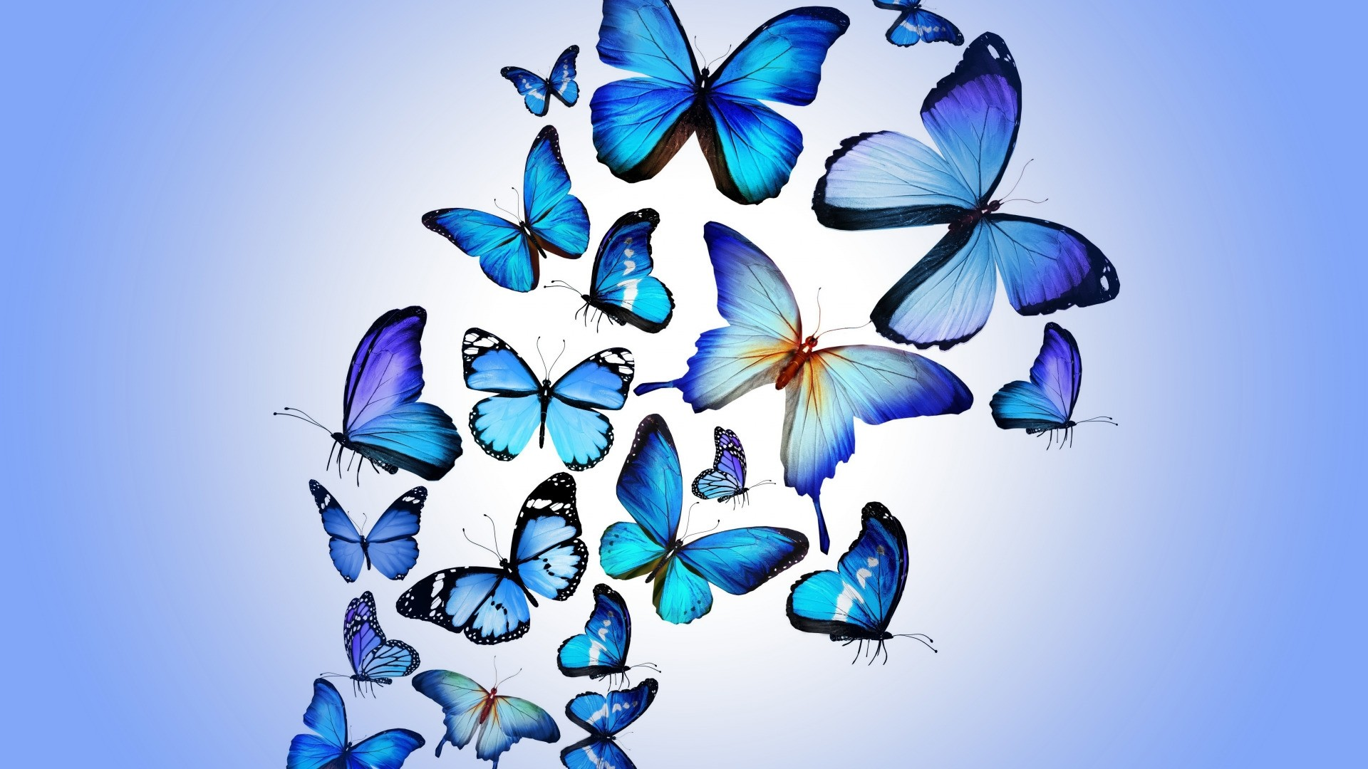 Blue Butterfly full hd wallpaper