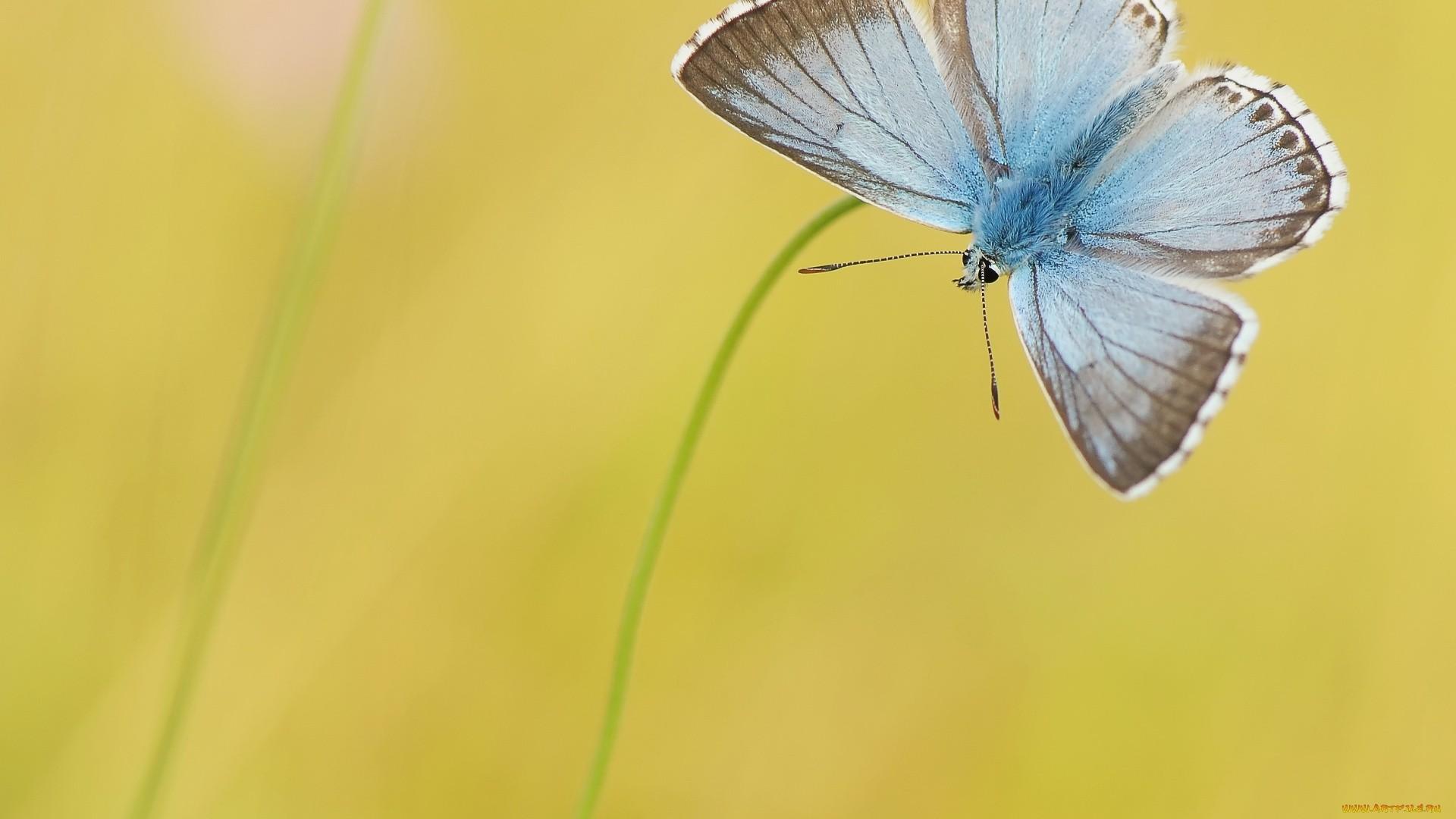 Blue Butterfly wallpaper image hd