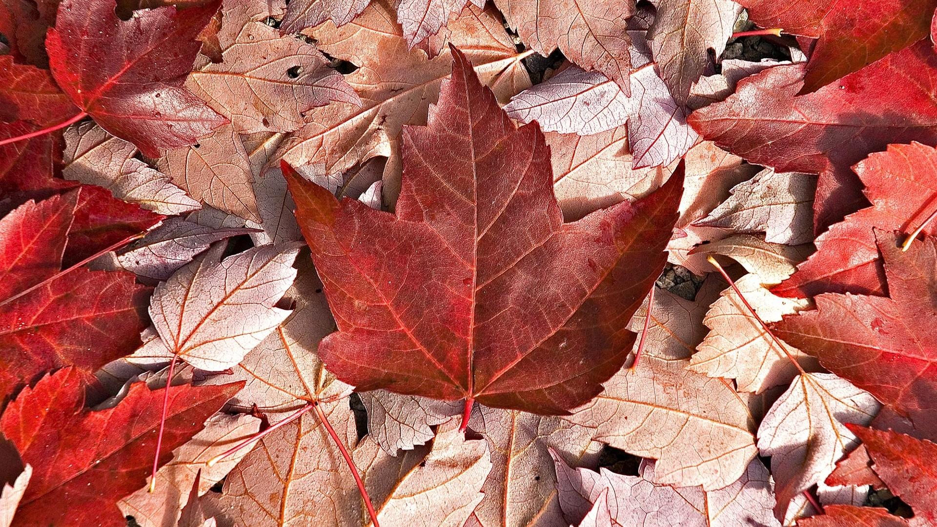 Canada Flag Wallpaper Image