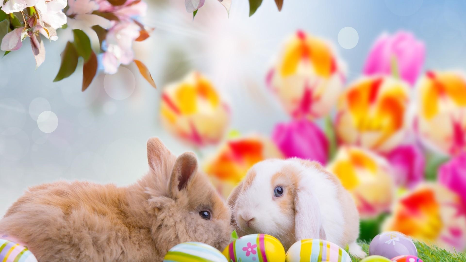 Cute Easter Wallpaper 1920x1080
