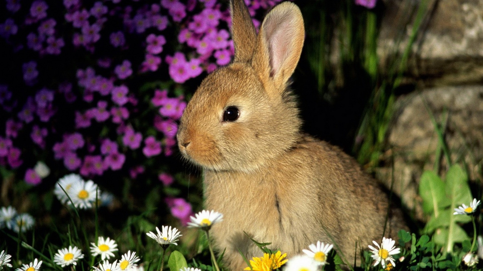 Cute Easter Wallpaper For Pc