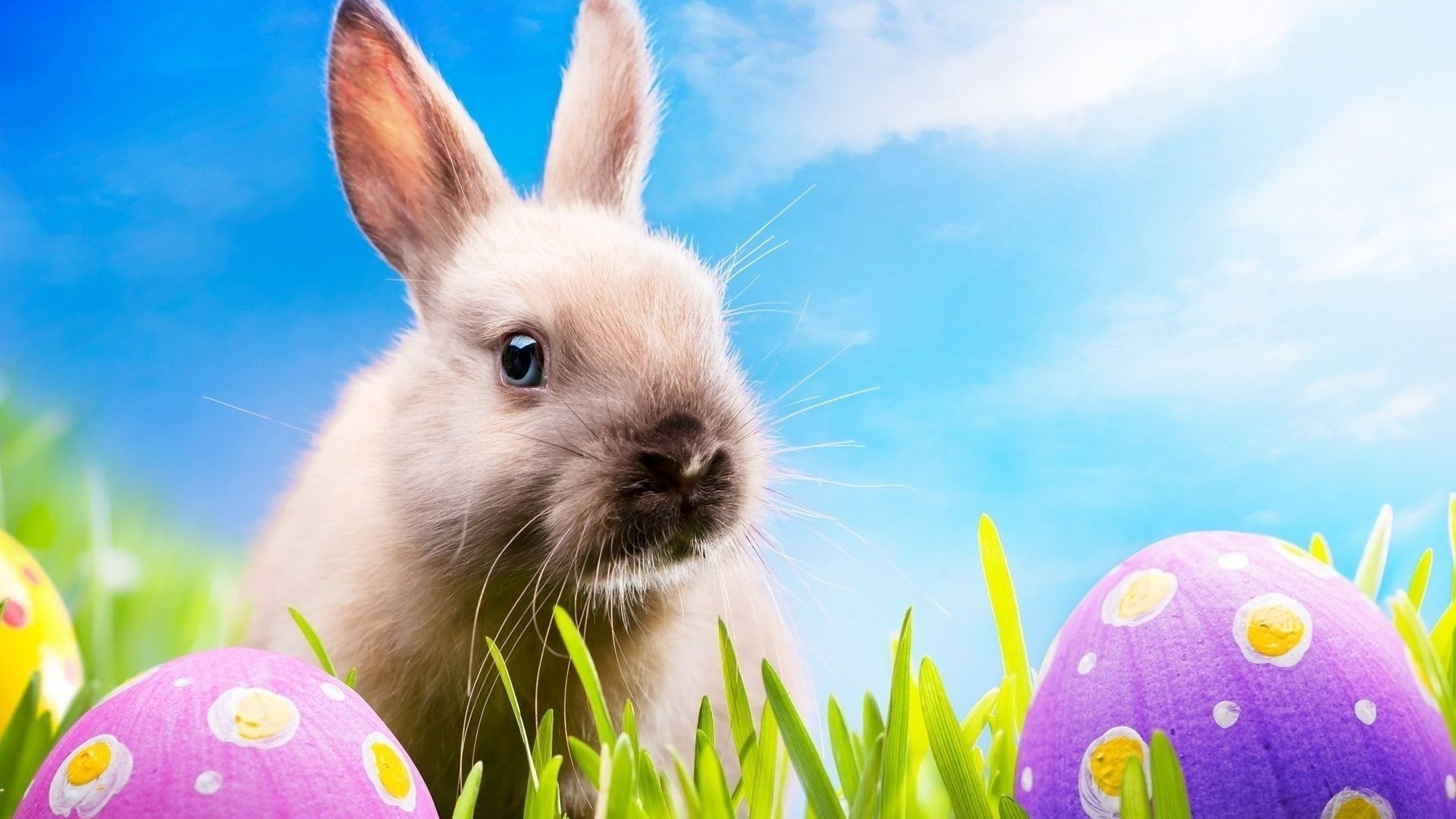 Cute Easter Wallpaper Full HD