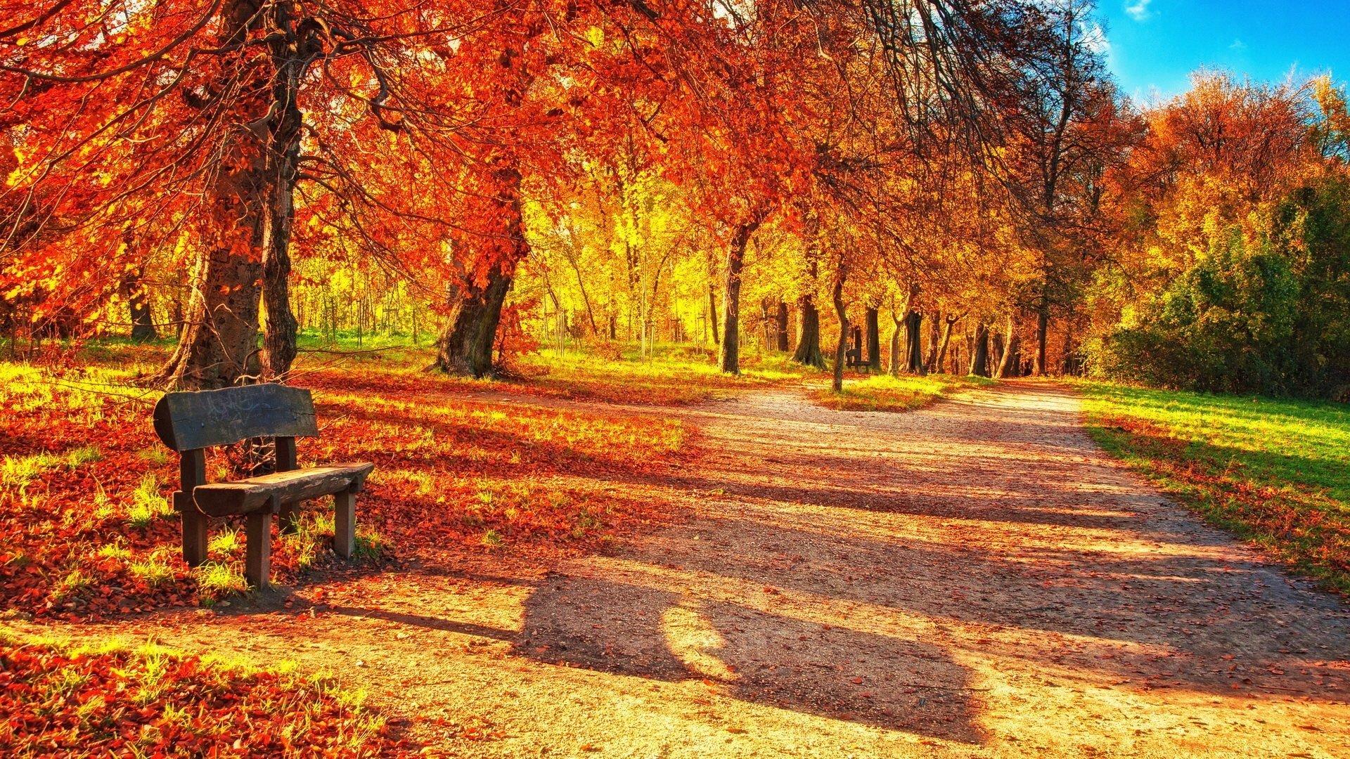 Cute Fall Wallpaper Download