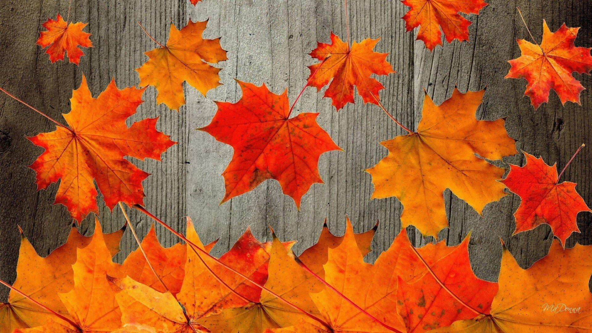 Cute Fall Wallpaper Free