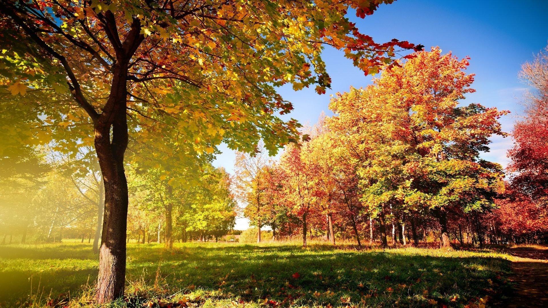 Cute Fall Wallpaper HD