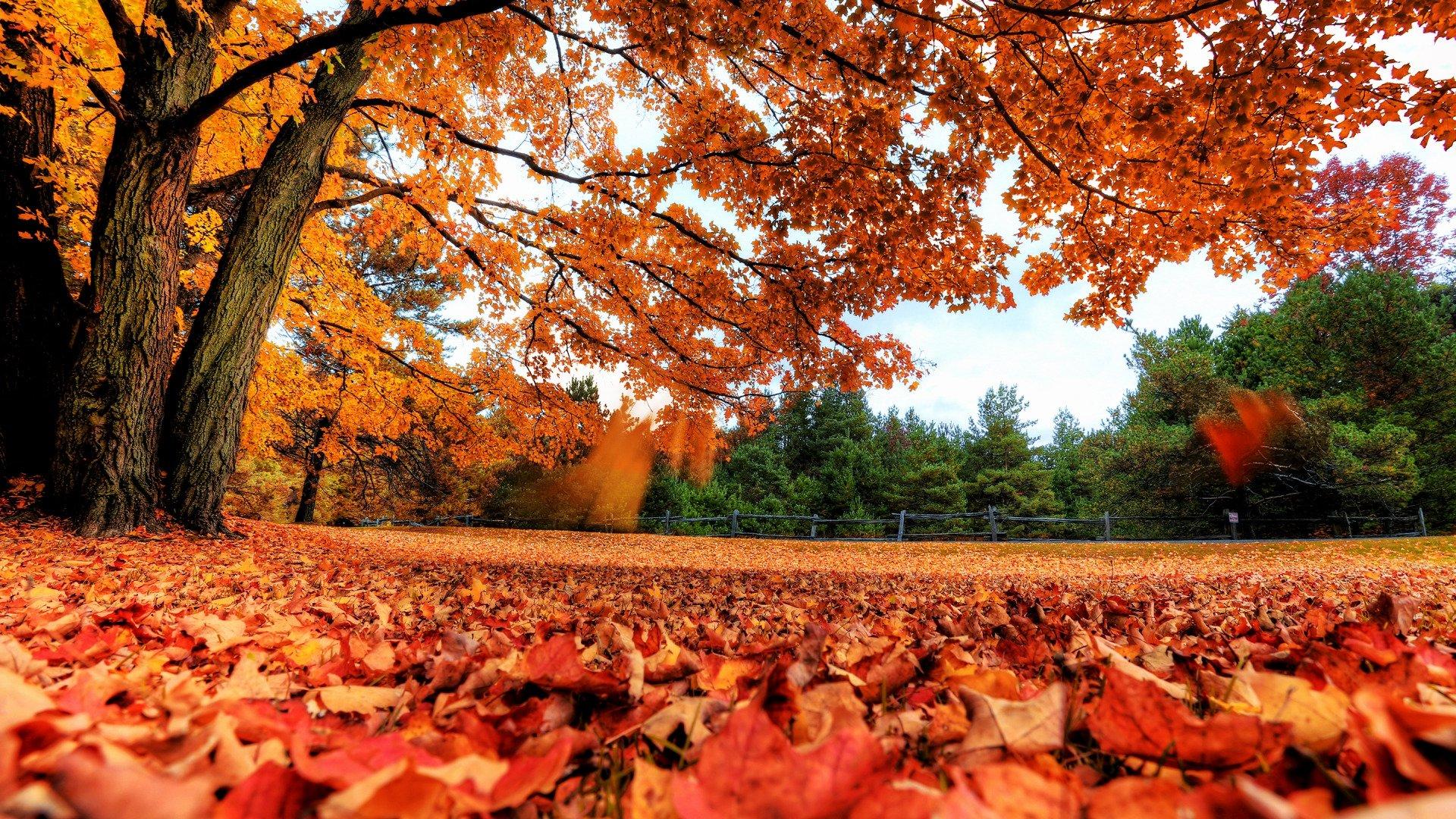 Cute Fall Wallpaper Image