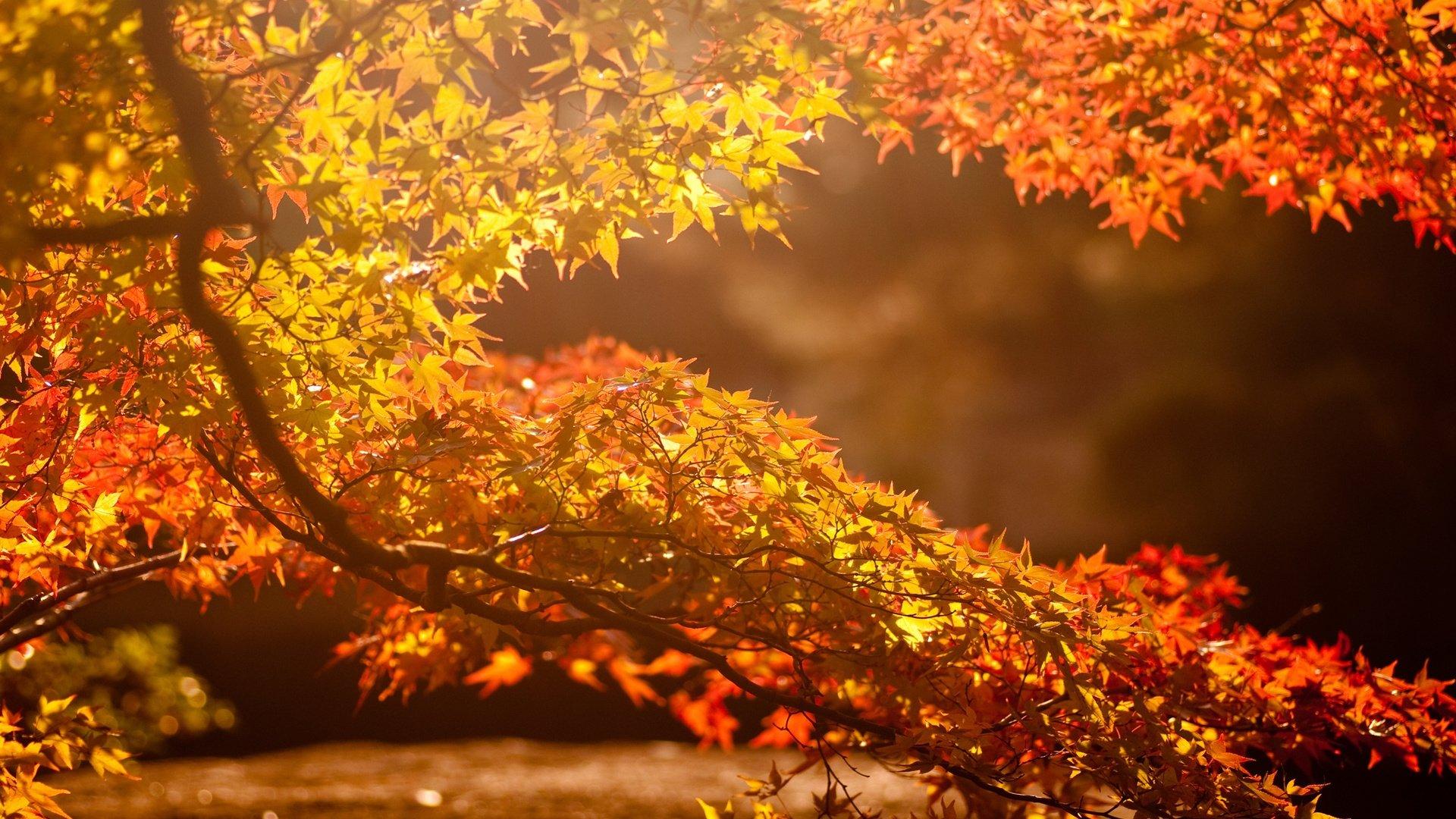 Cute Fall Wallpaper Pic