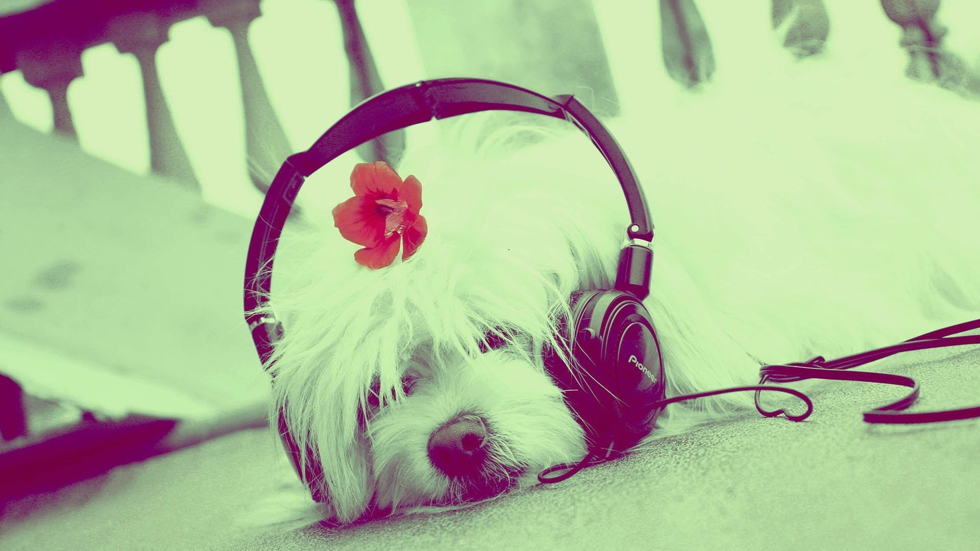 Cute Music Image