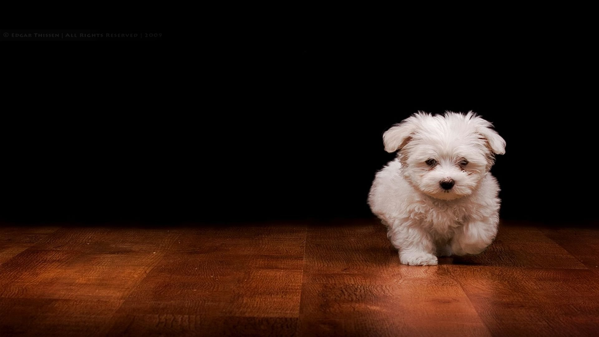 Cute White Wallpaper 1920x1080